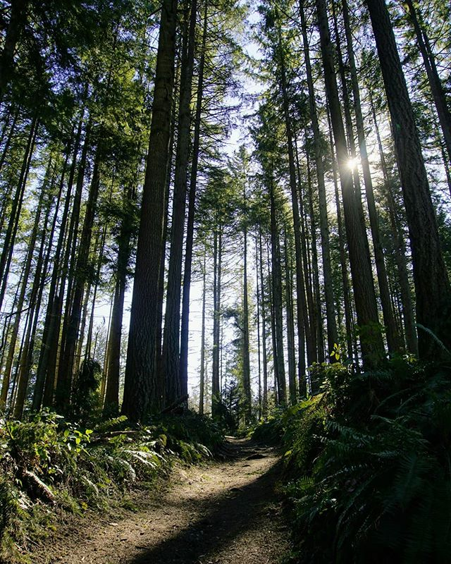 An Afternoon Hike In Bridle Trails State Park 🌲 Link in bio. #pnw #hiking #wastateparks #bridletrails #wanderwashington
