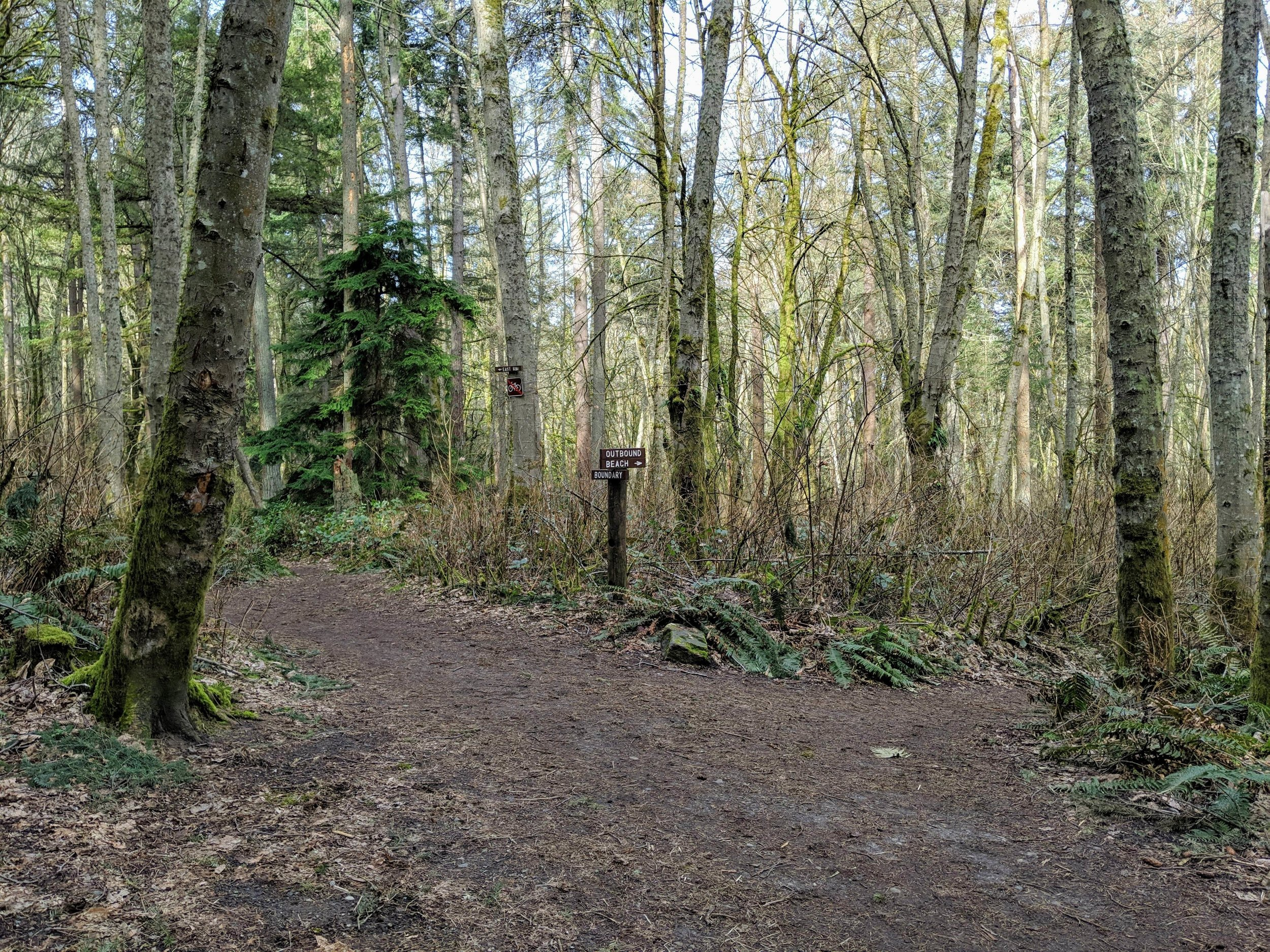 Trail intersection at Dash Point State Park.jpg
