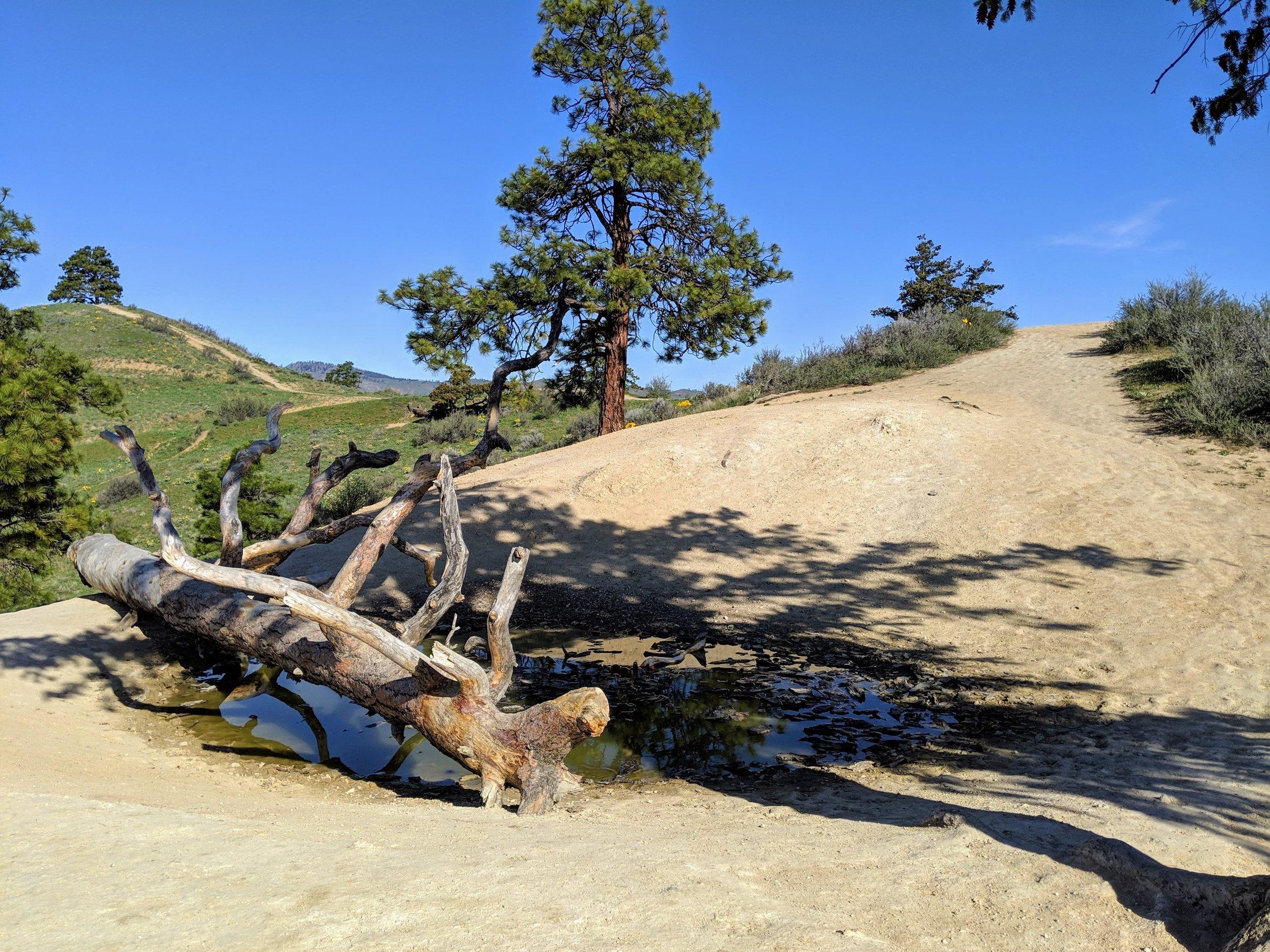 Saddle Rock 05.jpg
