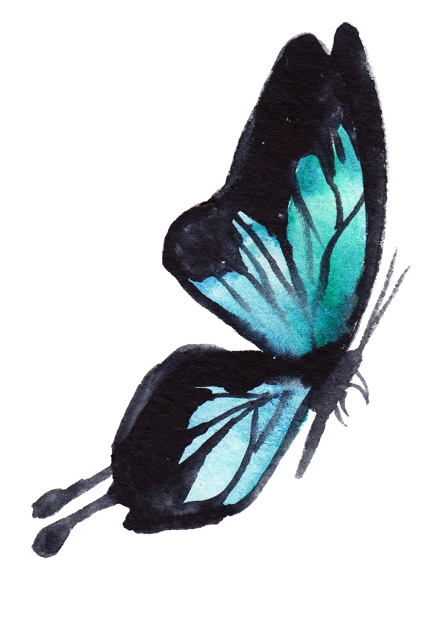 Butterfly8.png