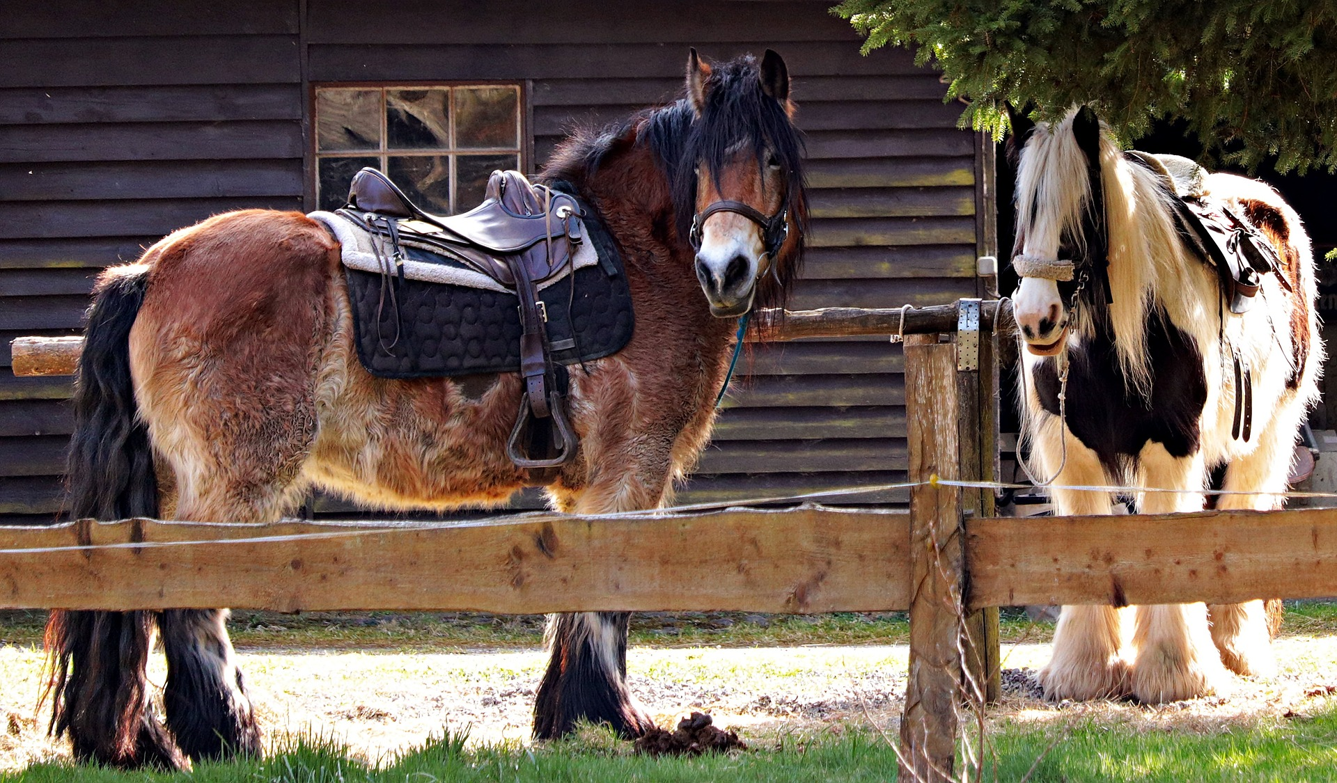 horses-2180584_1920.jpg
