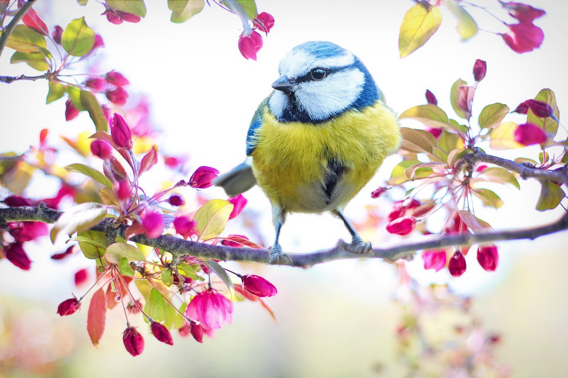 spring-bird-.jpg