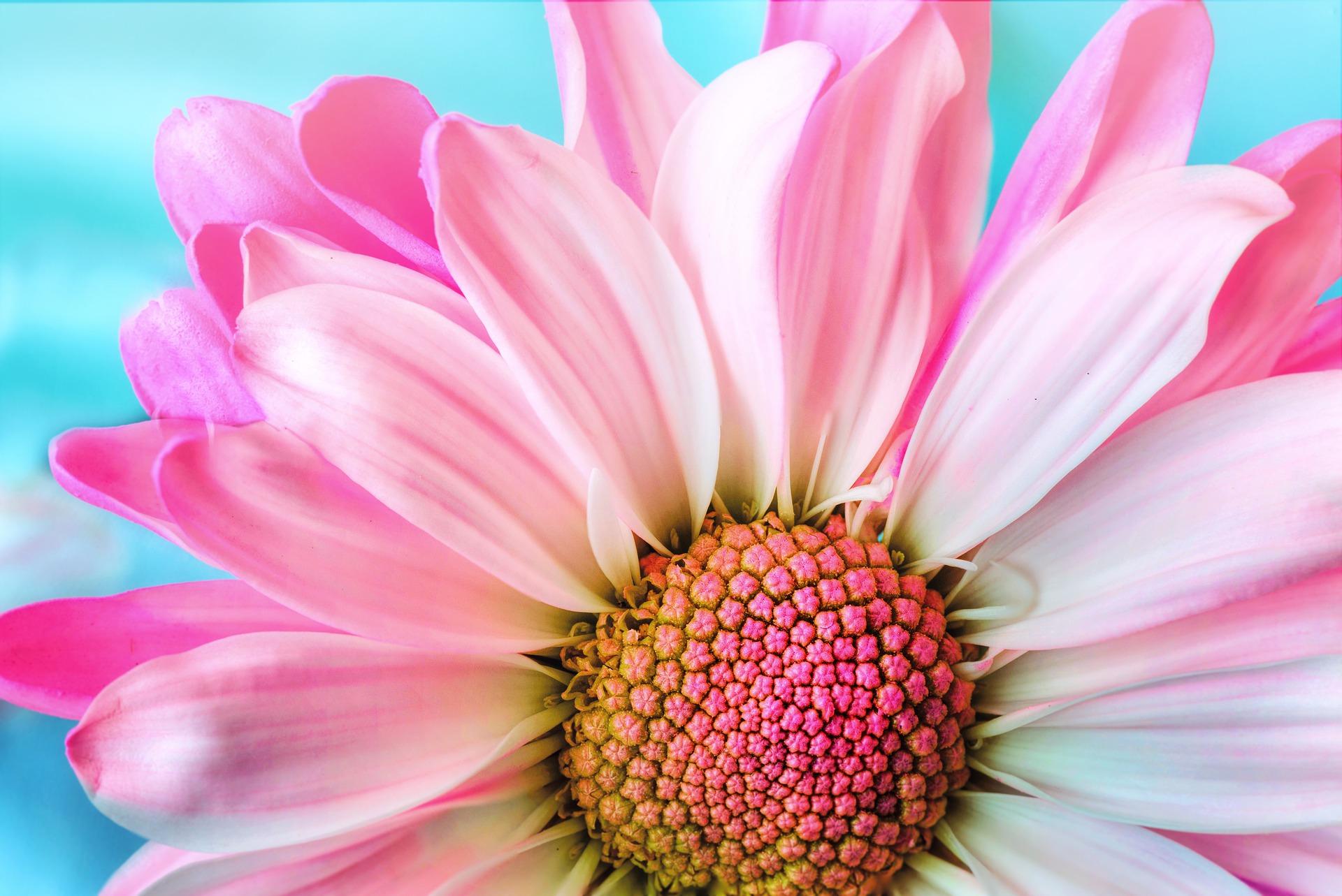 flower-summer.jpg