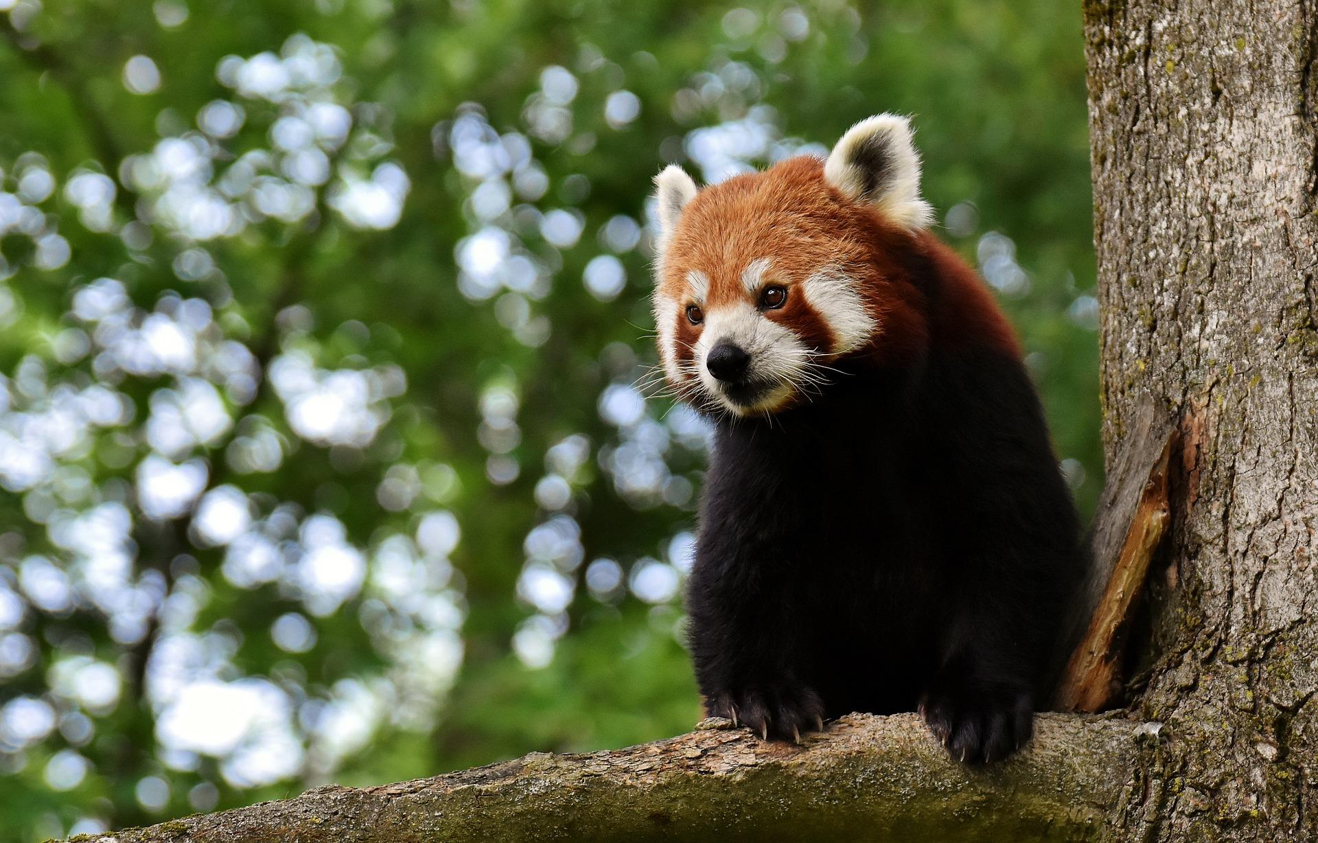panda-3508116_1920.jpg