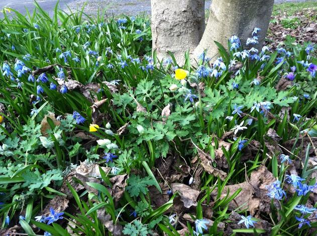 My mother's garden.