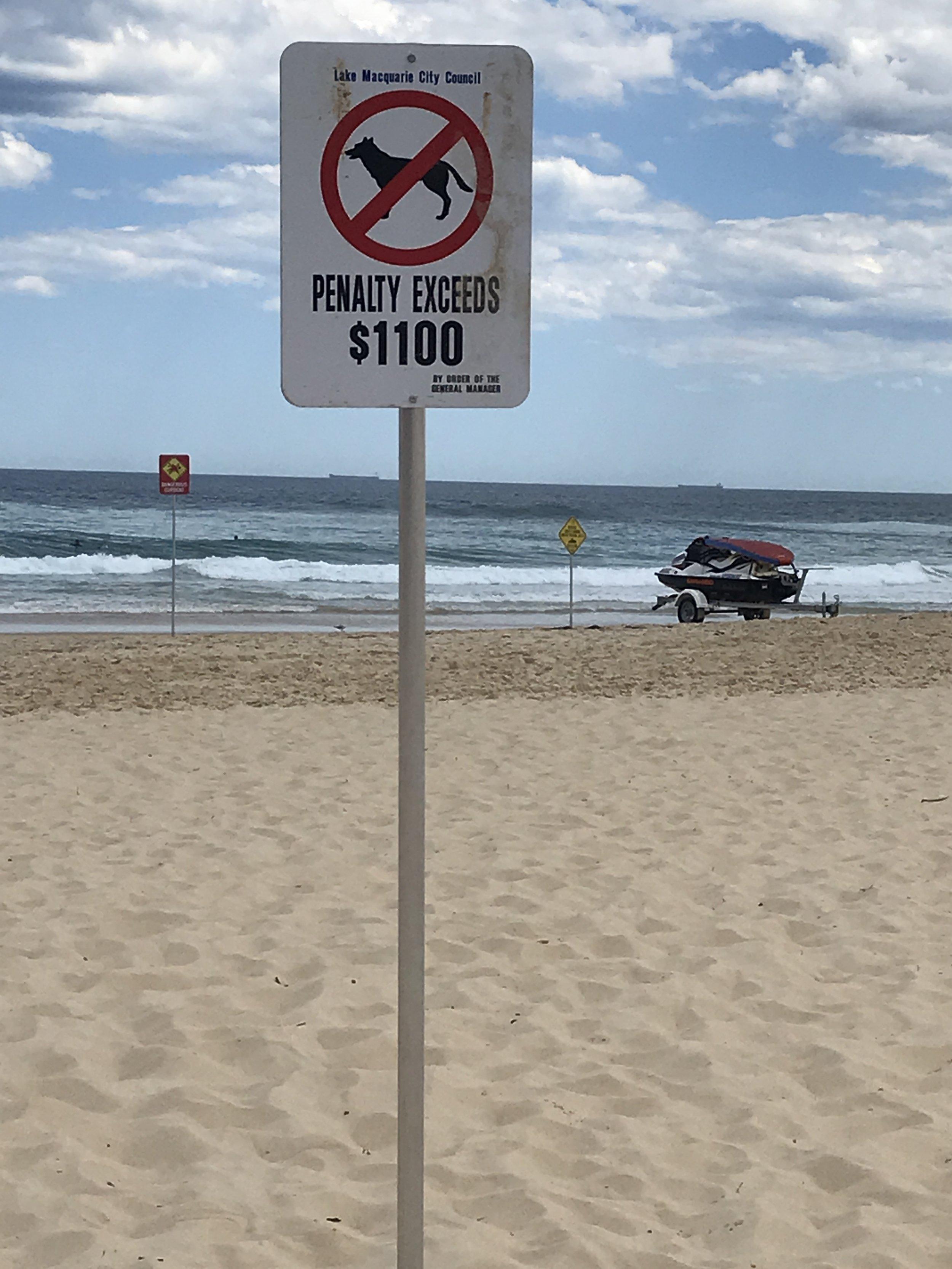 beach sign no dogs.JPG