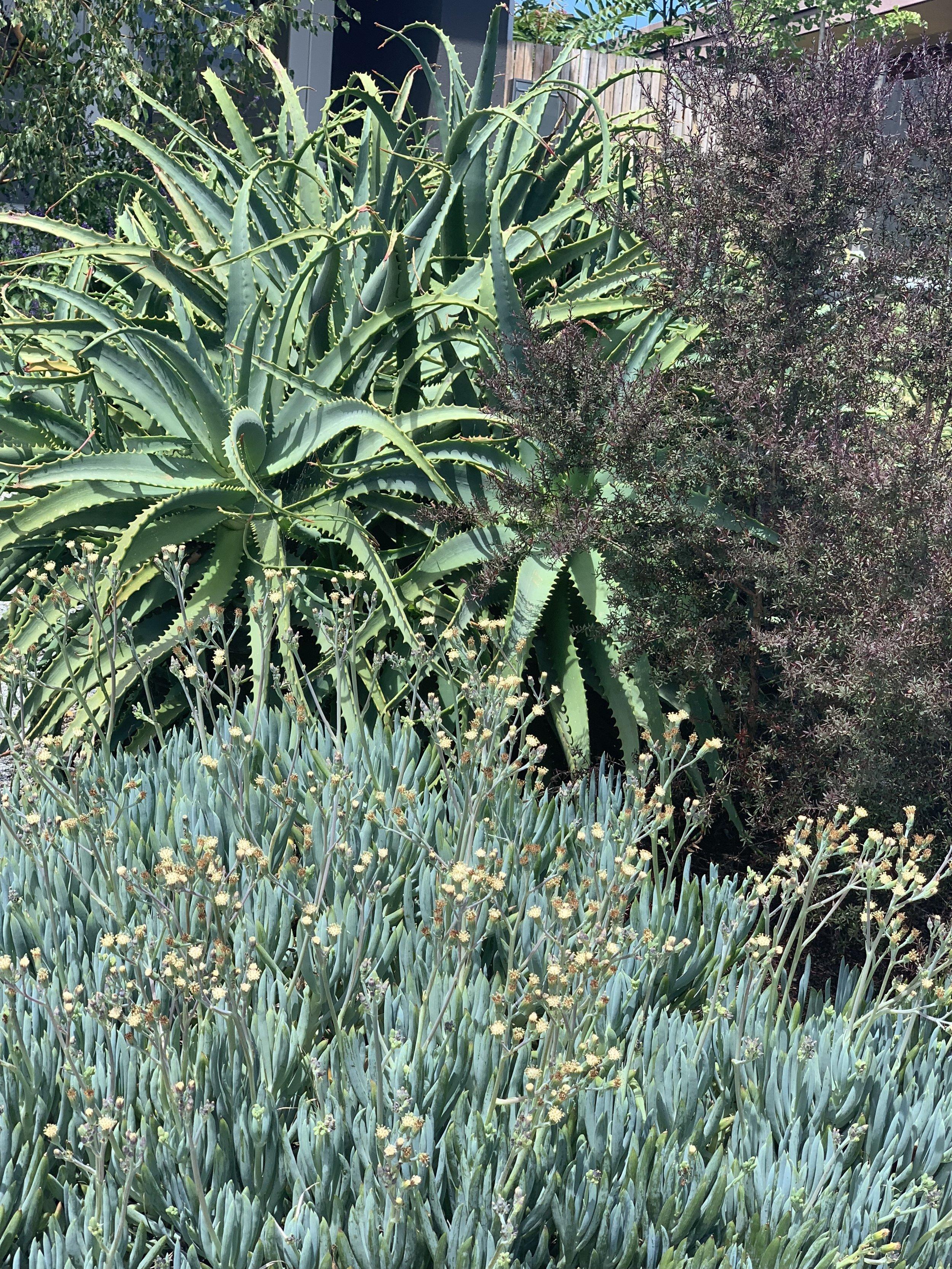 Skindepth's Native Medicinal Garden
