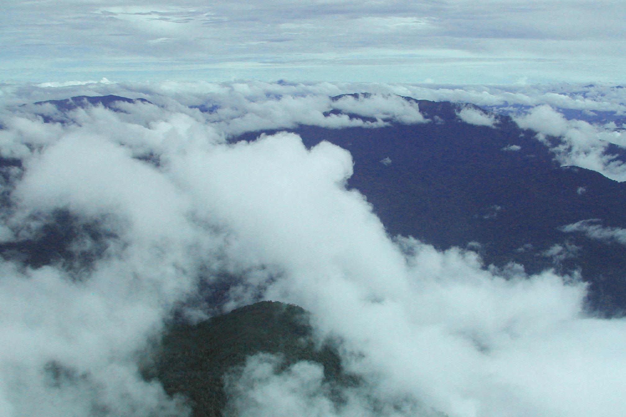 jungle from air.jpg