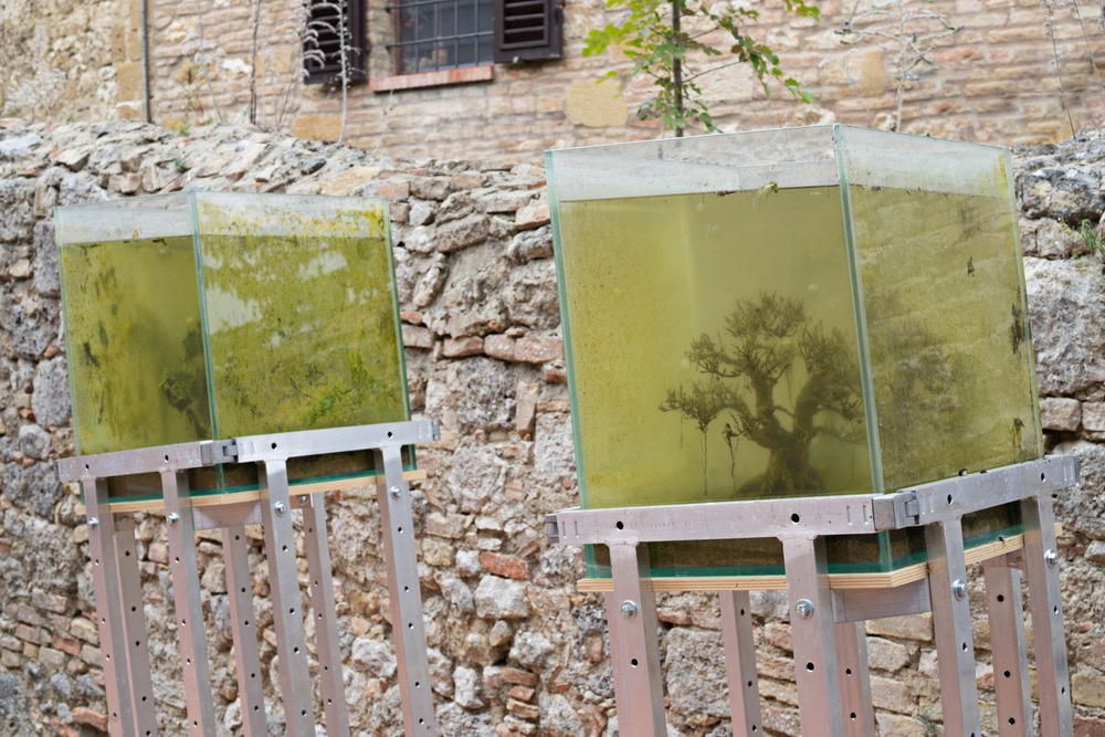 Drown.u and ir  , Hélène Thensiau  , and Bernard Leroy  ,  2015 (  aquariums, bonsai, aluminium bases  ), installation view, Galleria Continua,San Gimignano / Beijing / Les Moulins / Habana. Photo by: Ela Bialkowska.