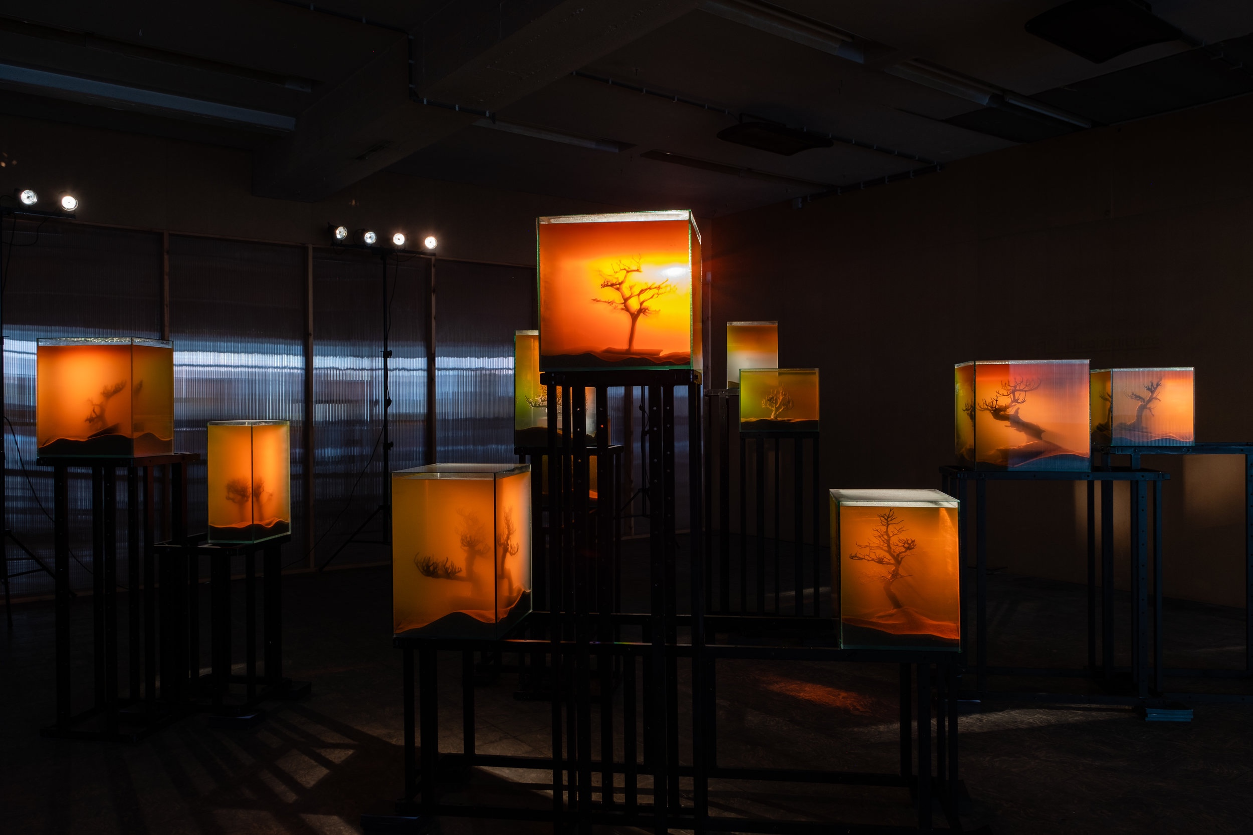 Various Artists, 'toxiThropea.sunset' (2019), in 'Deadly Affairs' (23.03-30.06.2019), Kunsthal Extra City, Antwerp, photo by Tomas Uyttendaele_11.jpg