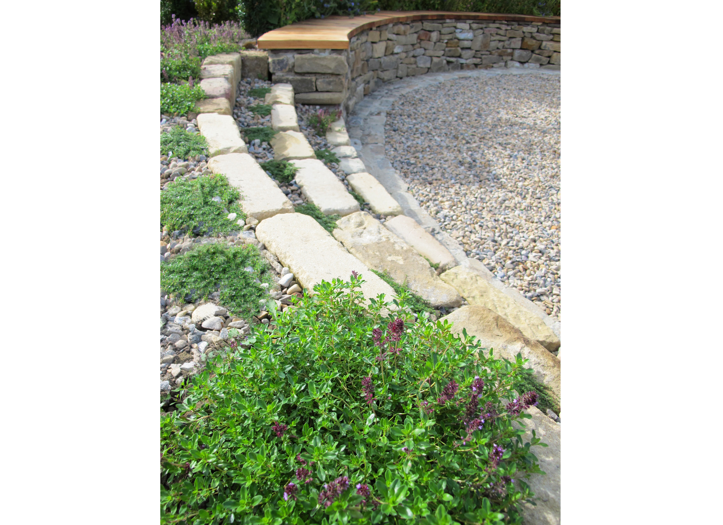 Curved Steps & Thymes