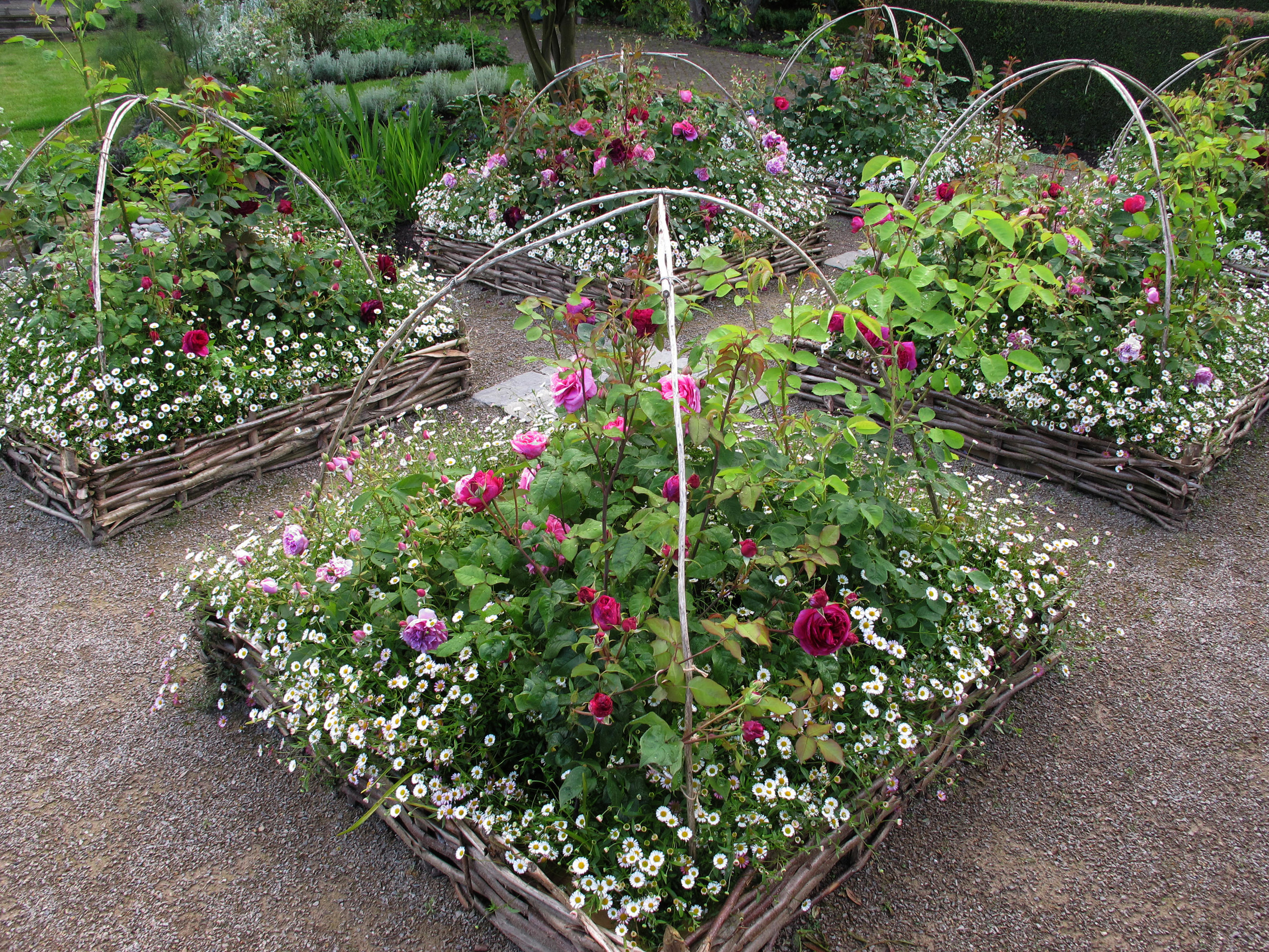 Rose Beds & Mexican Daisies, Stockton On Tees