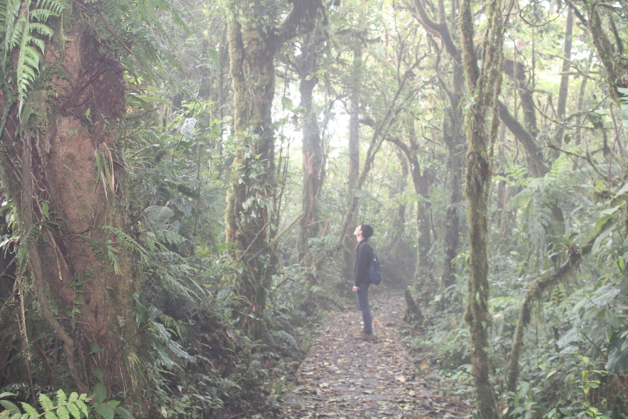 coudy forest