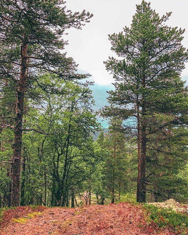 I går gikk jeg en tur, og kan ikke si annet enn at jeg elsker å være ute og jeg føler meg heldig som har skogen rett bak huset 🥰💛✨ #nature