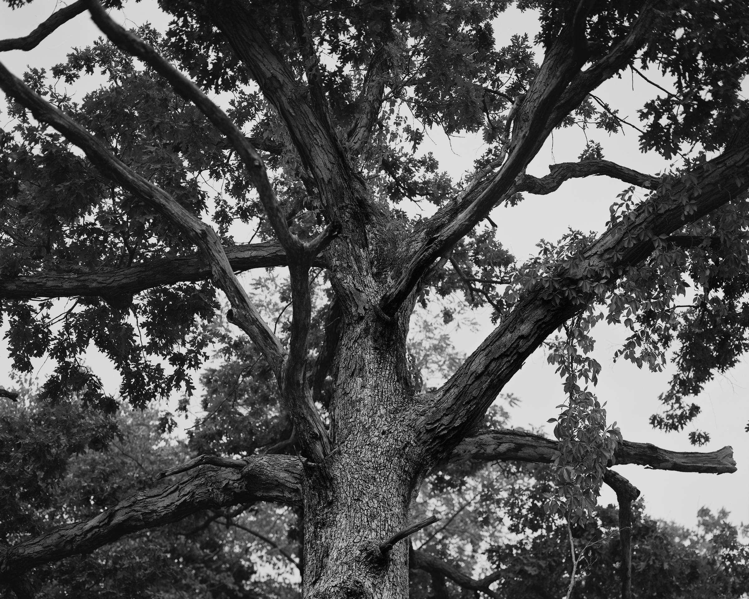 Grindstone Tree.jpg