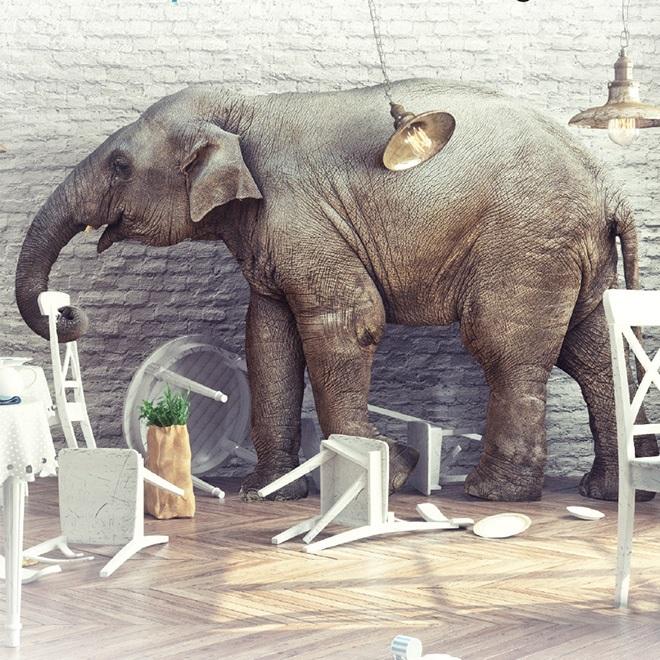 Jumbo Elephant.jpg