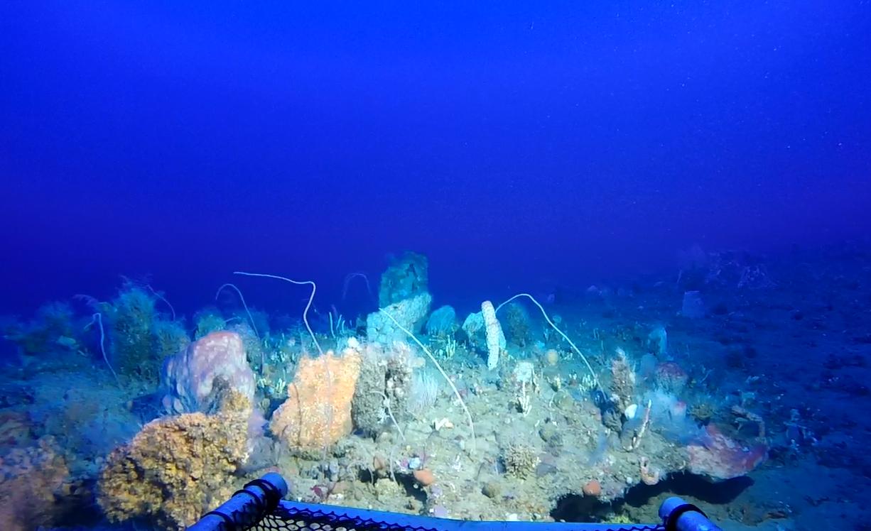 More reef habitat at 250ft.
