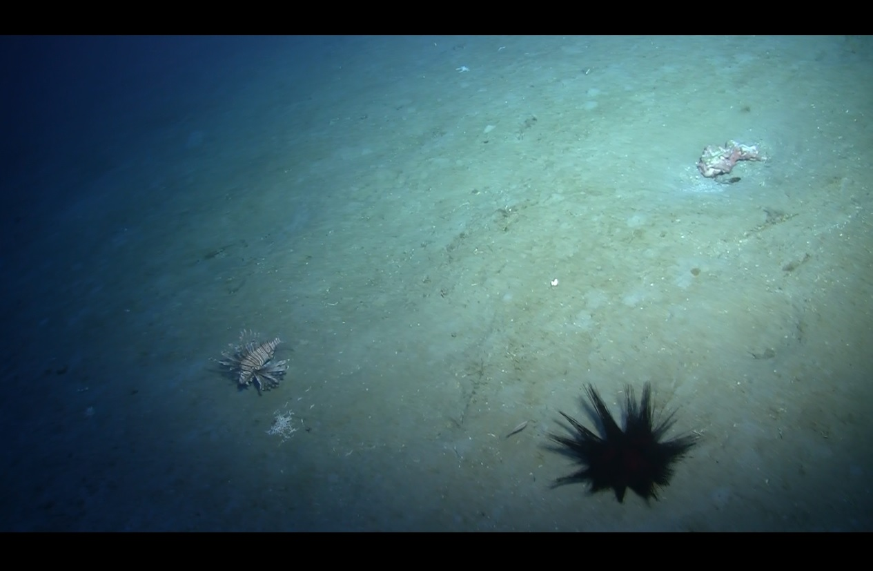 Lionfish Hunting  250ft