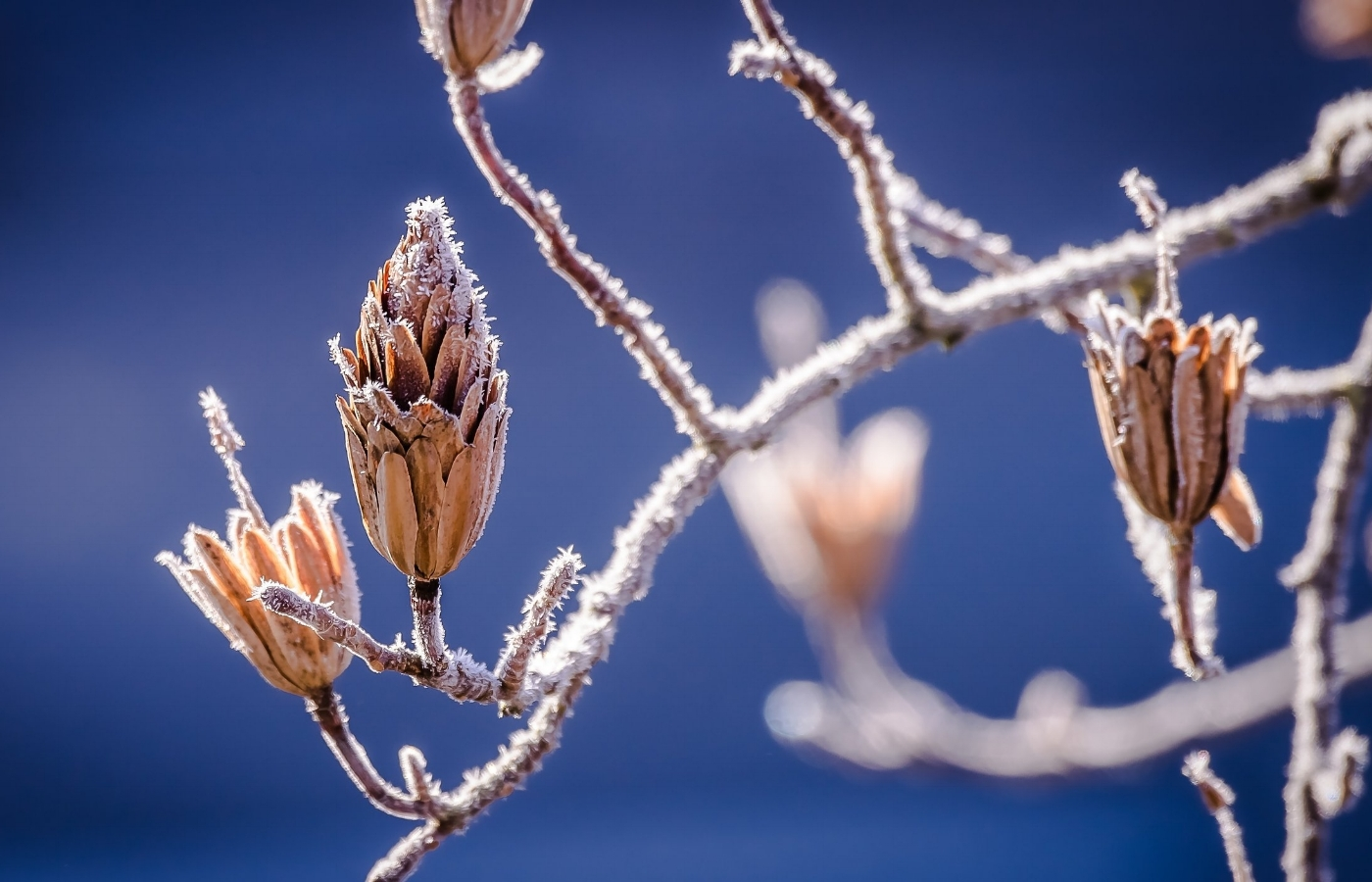 winter-598631.jpg