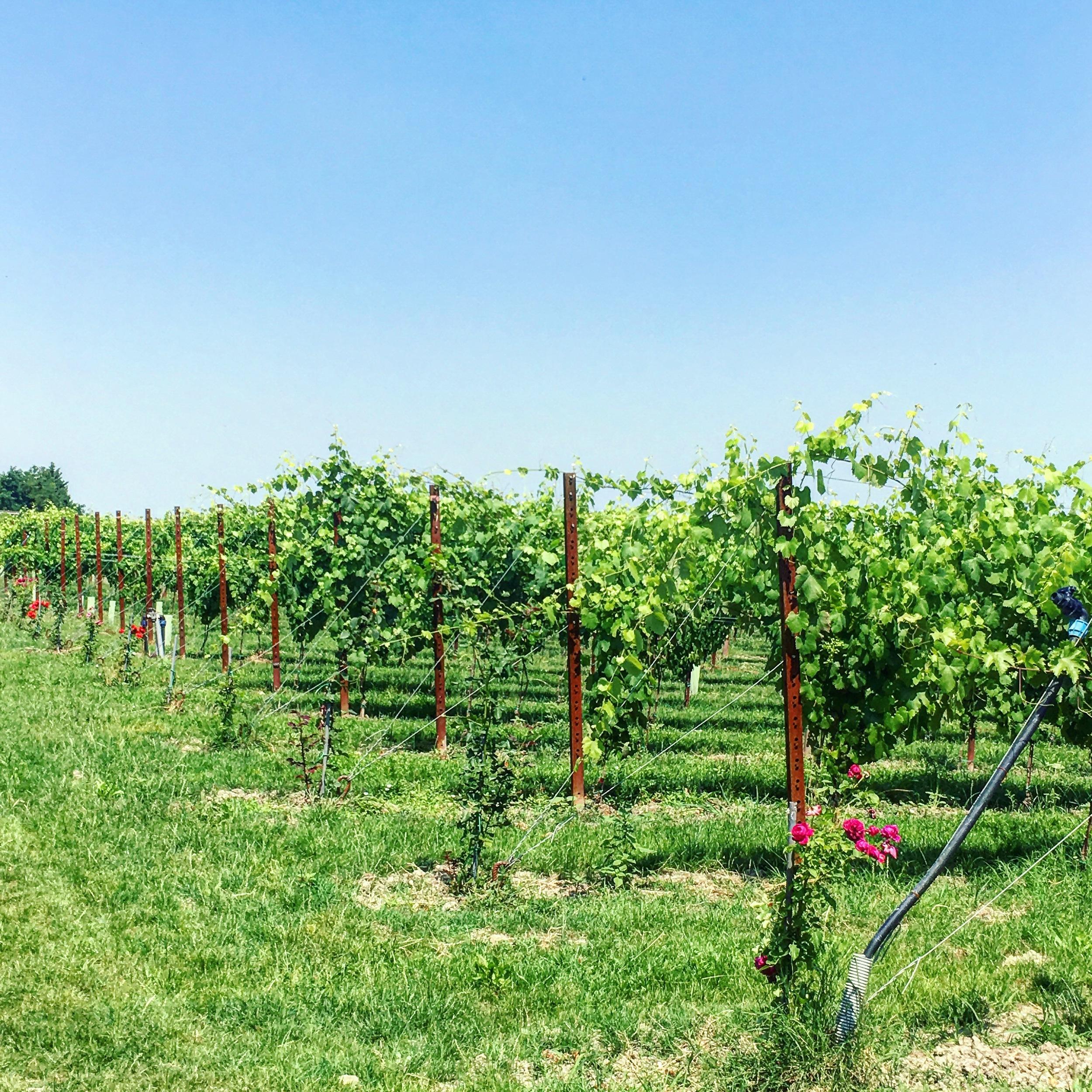 Acetaia del Cristo Traditional Balsamic Vinegar of Modena
