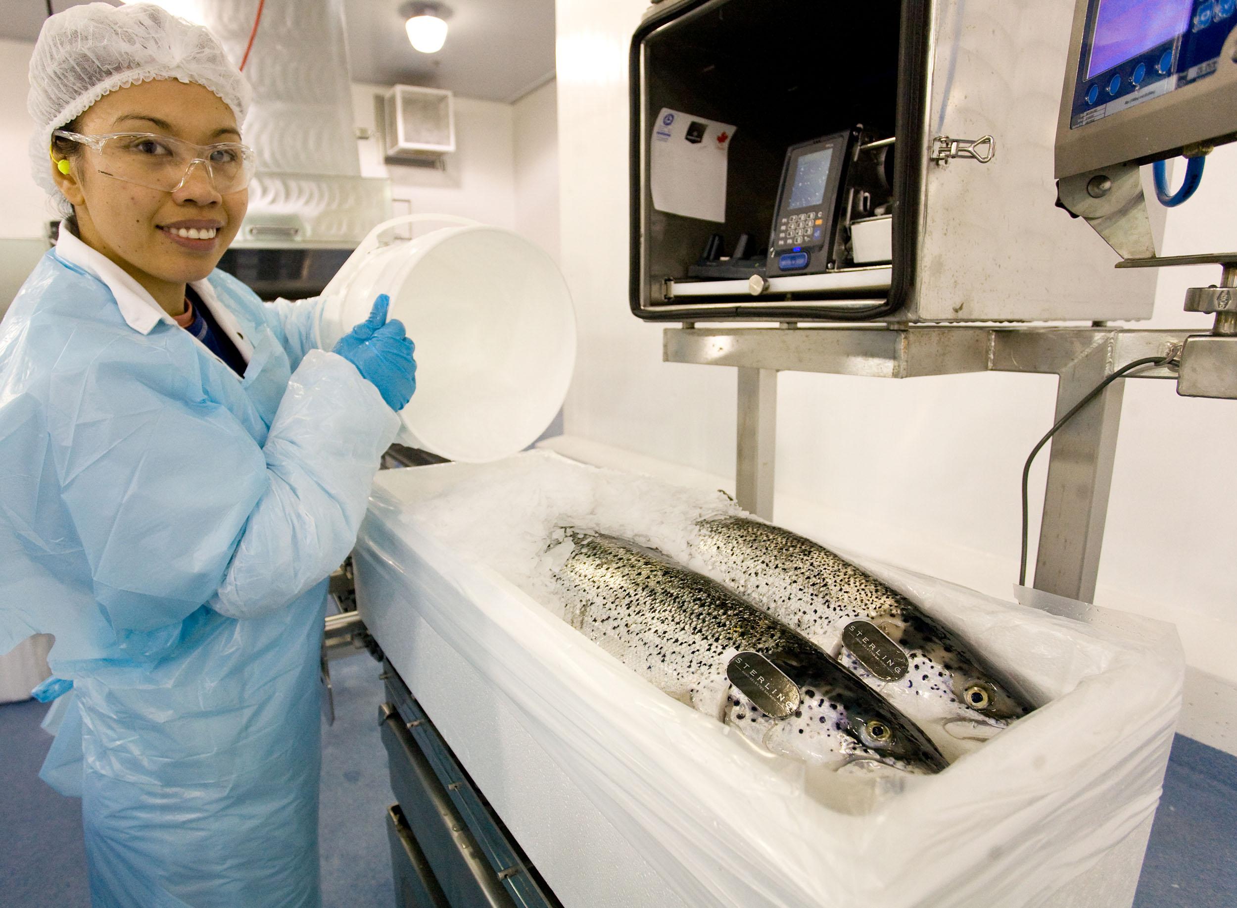 MHC fresh salmon boxed.jpg