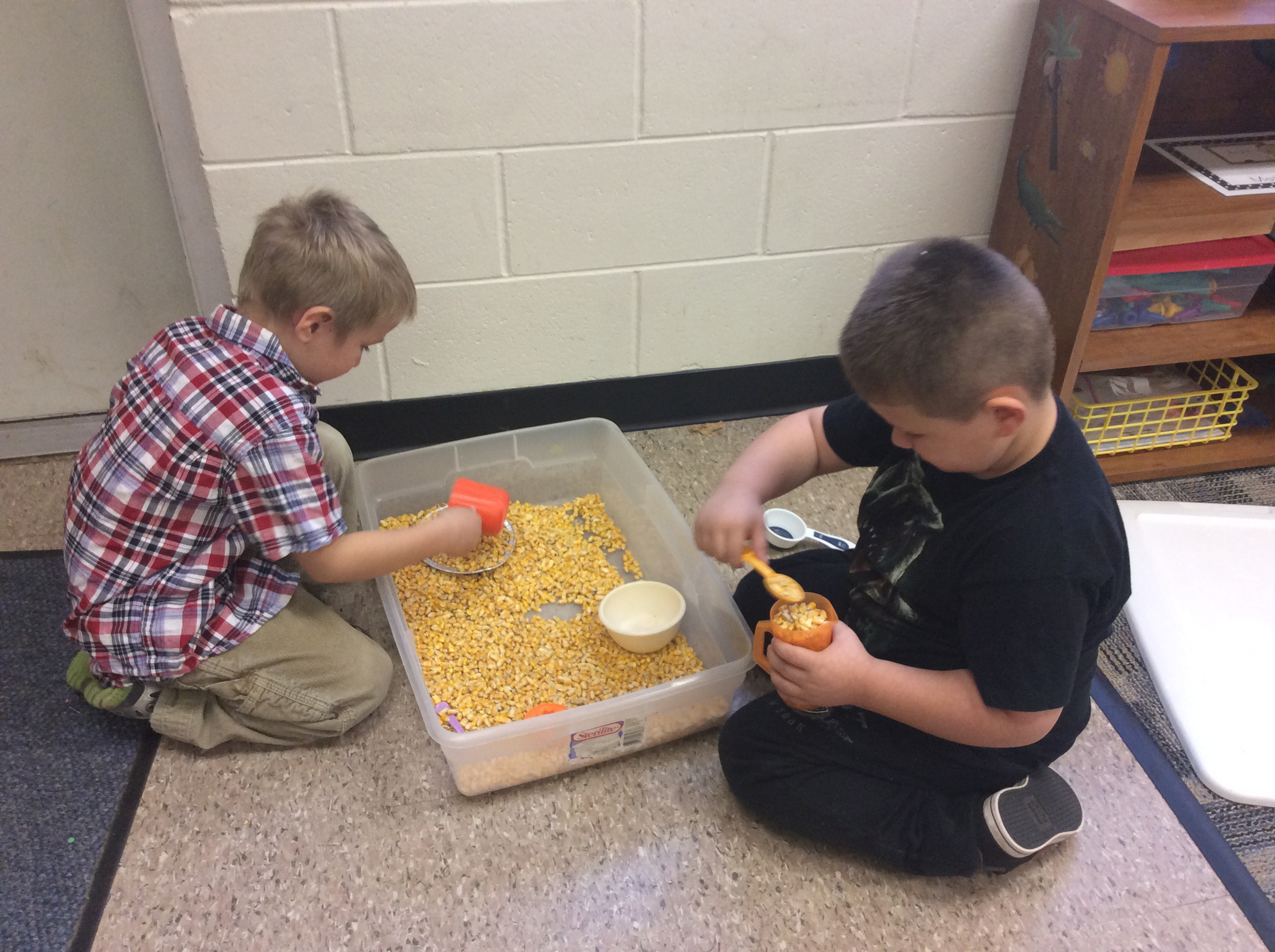 Scooping and pouring corn.