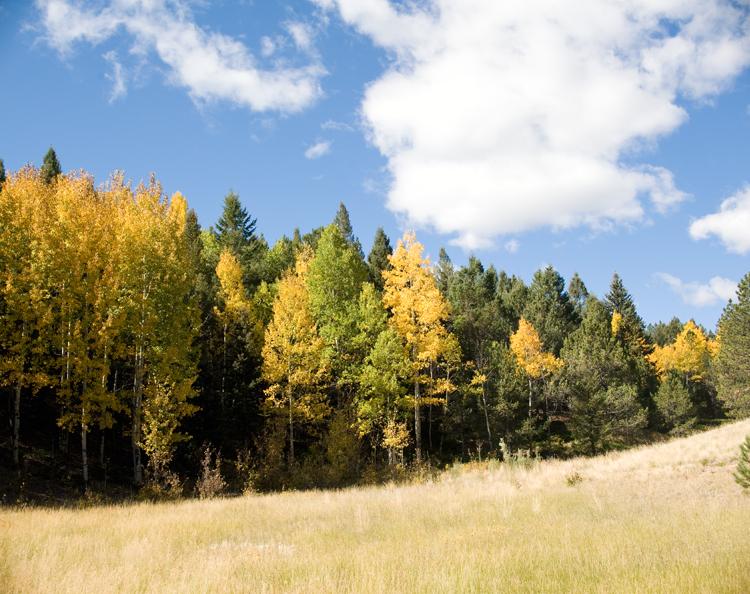 Colorado_Aspens_Blair_Designs_04.jpg
