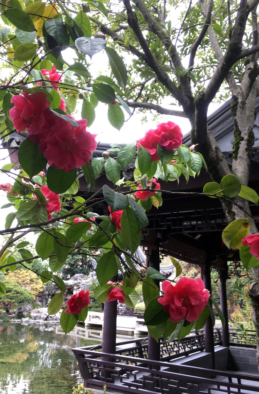 lan-su-garden-portland-oregon-16.jpg