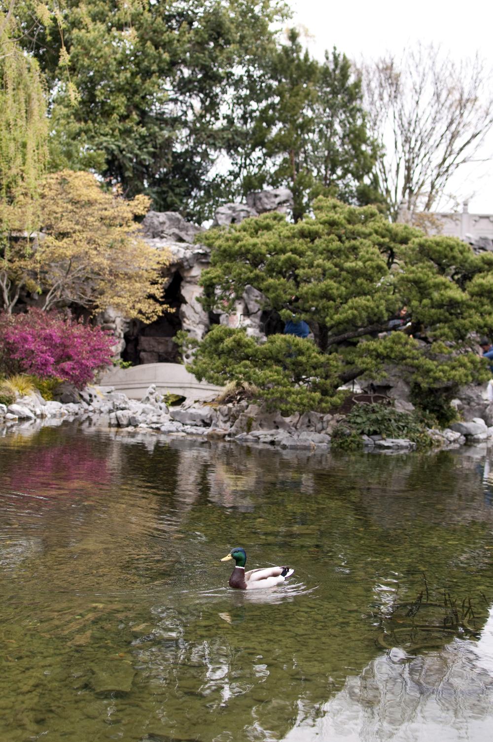 lan-su-garden-portland-oregon-08.jpg