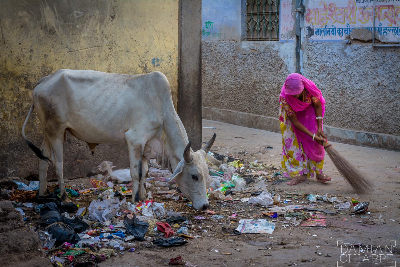 Pushkar, 2016.-