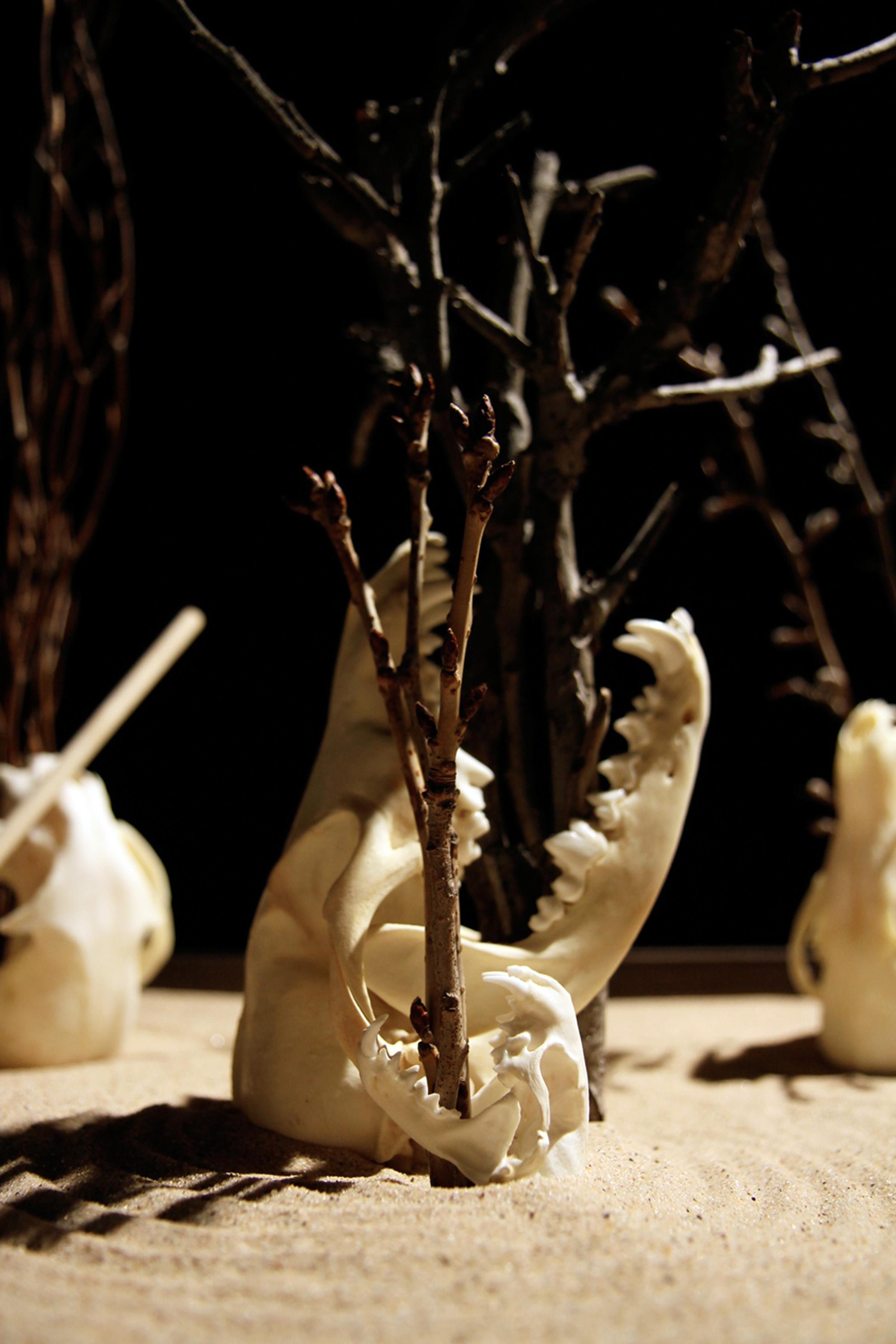 skulldetail3.jpg
