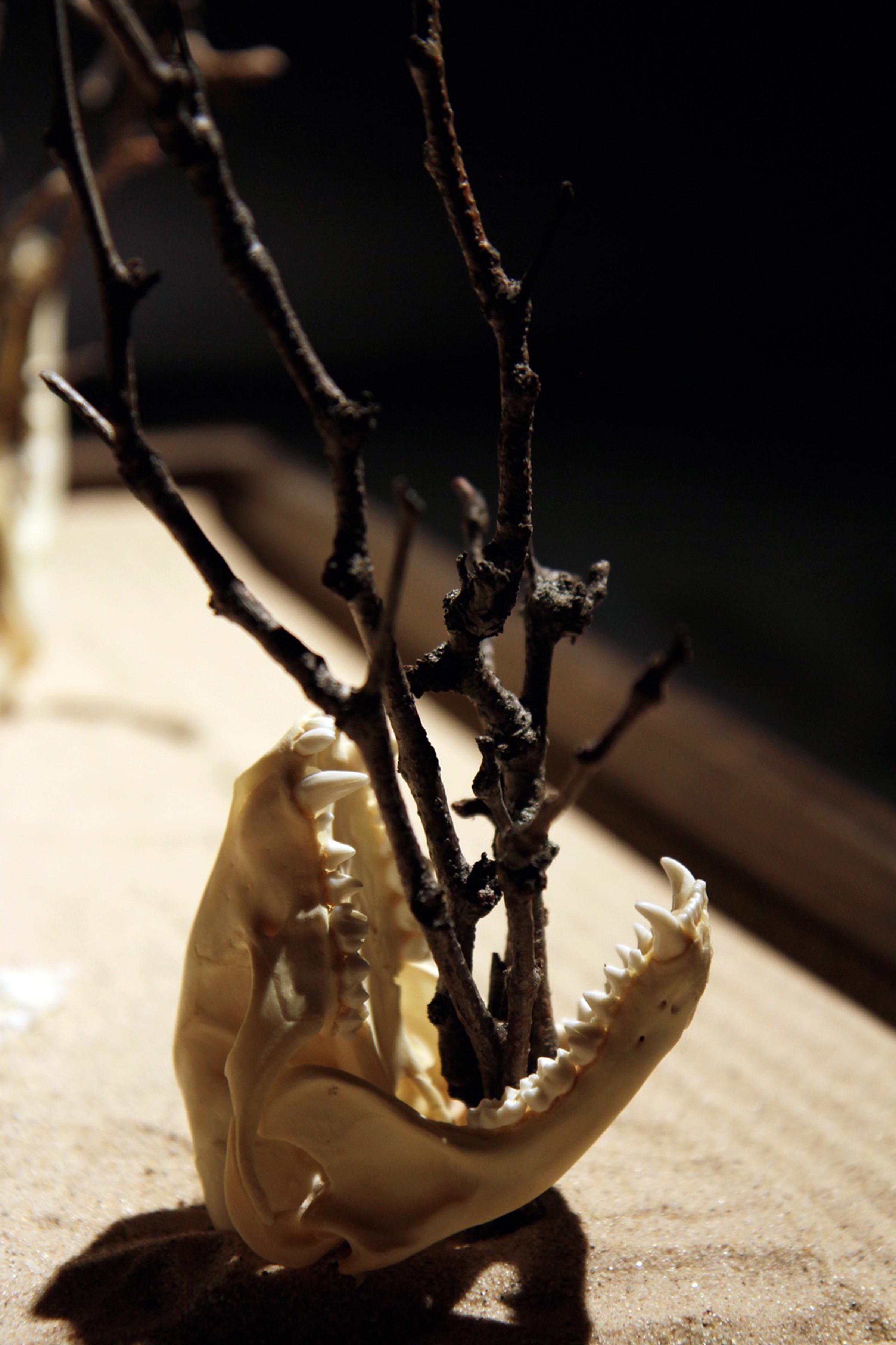 skulldetail4.jpg