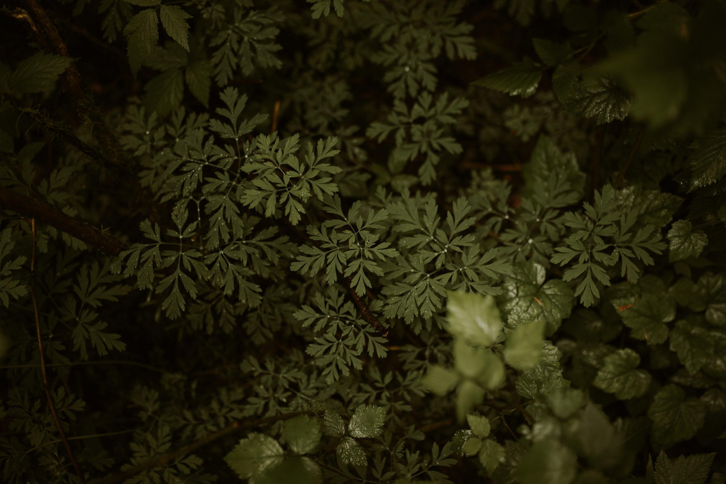 Seattle Wedding Photographer - Adventure Photography - Washington Couple's Photographer - Hiking - Kanaskat Palmer State Park - Lifestyle Photography - Nature - Hanging Gardens - Beautiful Washington Hike - Hikes Near Seattle - Traveling Wedding Photography - Travel - Destination Wedding Photographer