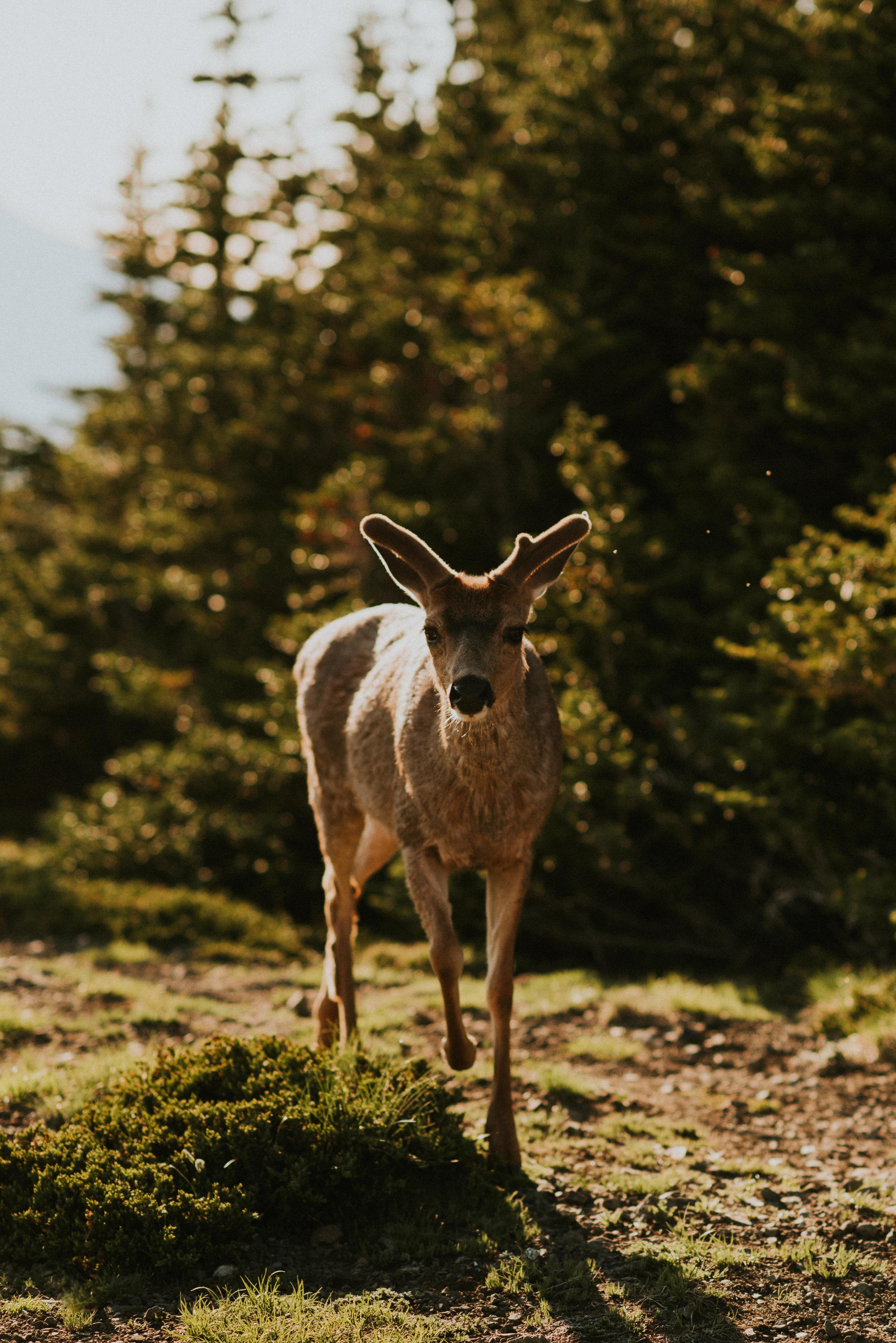 Alaina + Jared - Olympic National Park Elopement - Kamra Fuller Photography-97.jpg