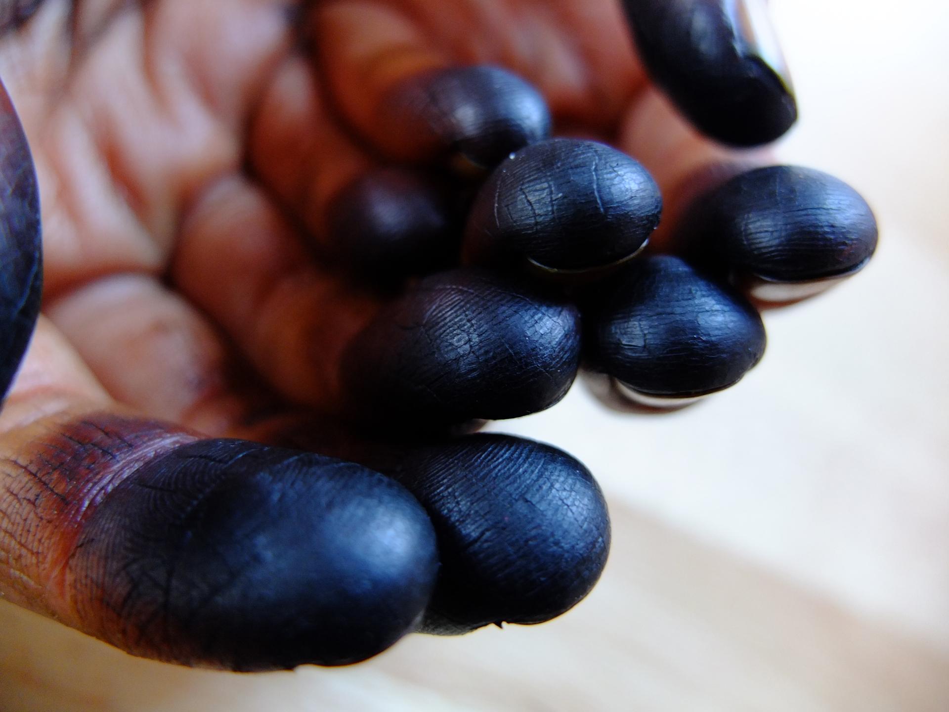 Juglans manos