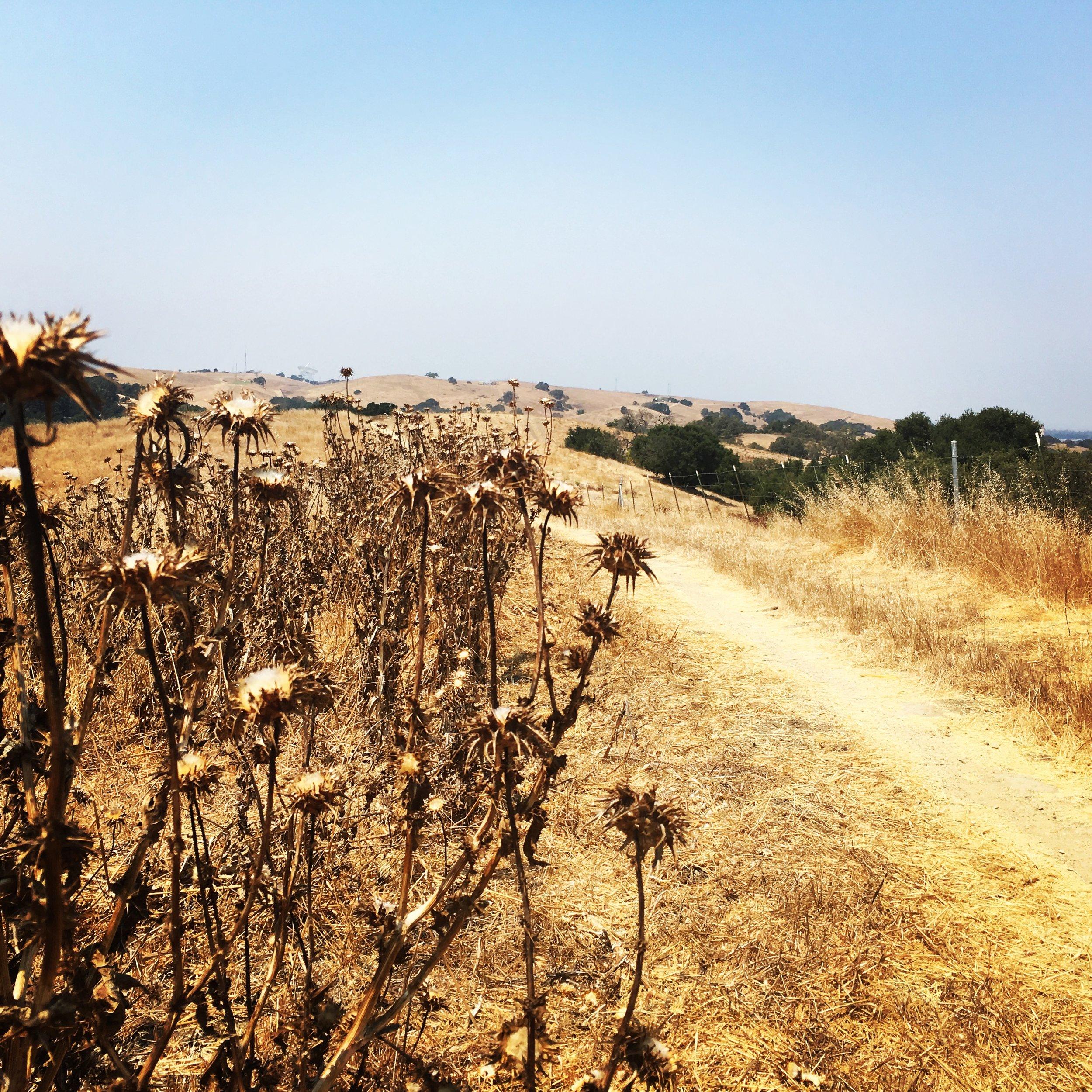 A Local Trail