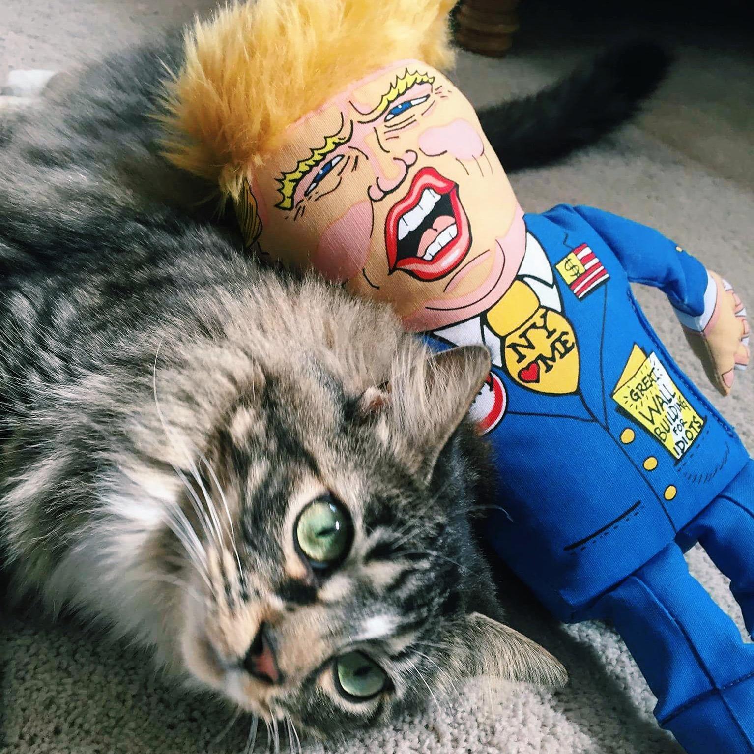 Some cats prefer dog toys