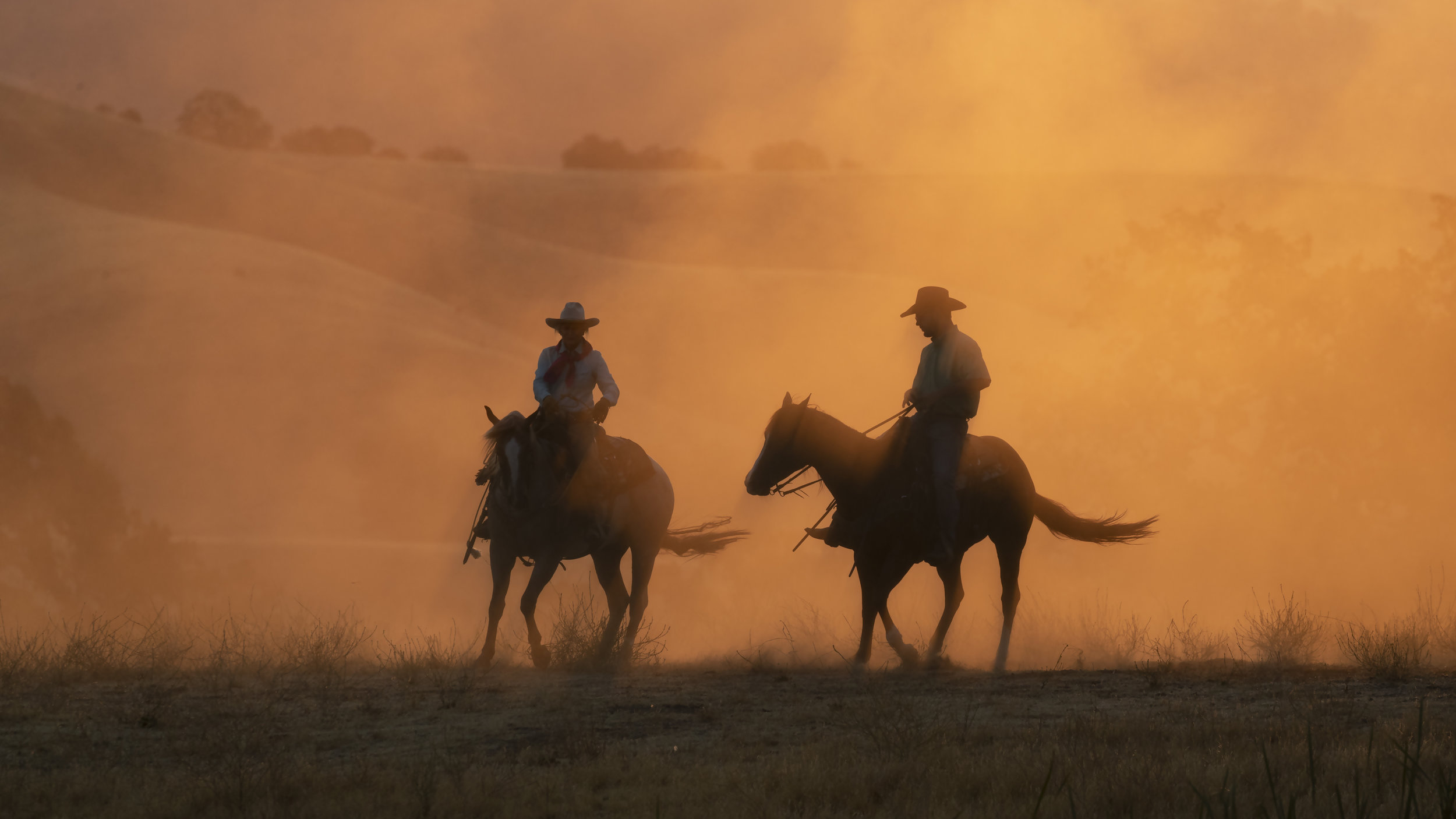 Read all about Cowboy 911 -