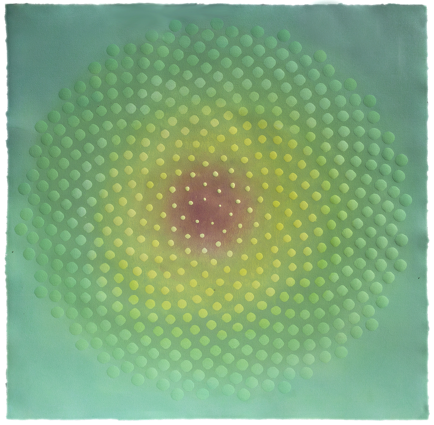 Phyllotaxis 34