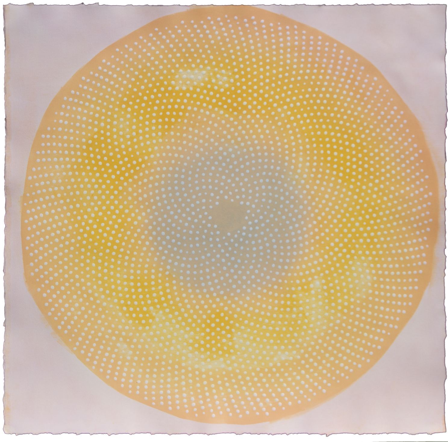 Phyllotaxis 30