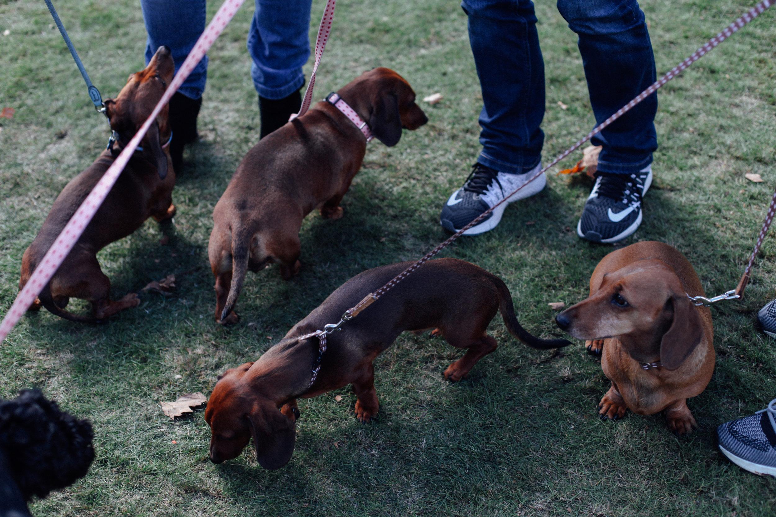 Sausage Dog O'Clock - Alex Krook.jpg