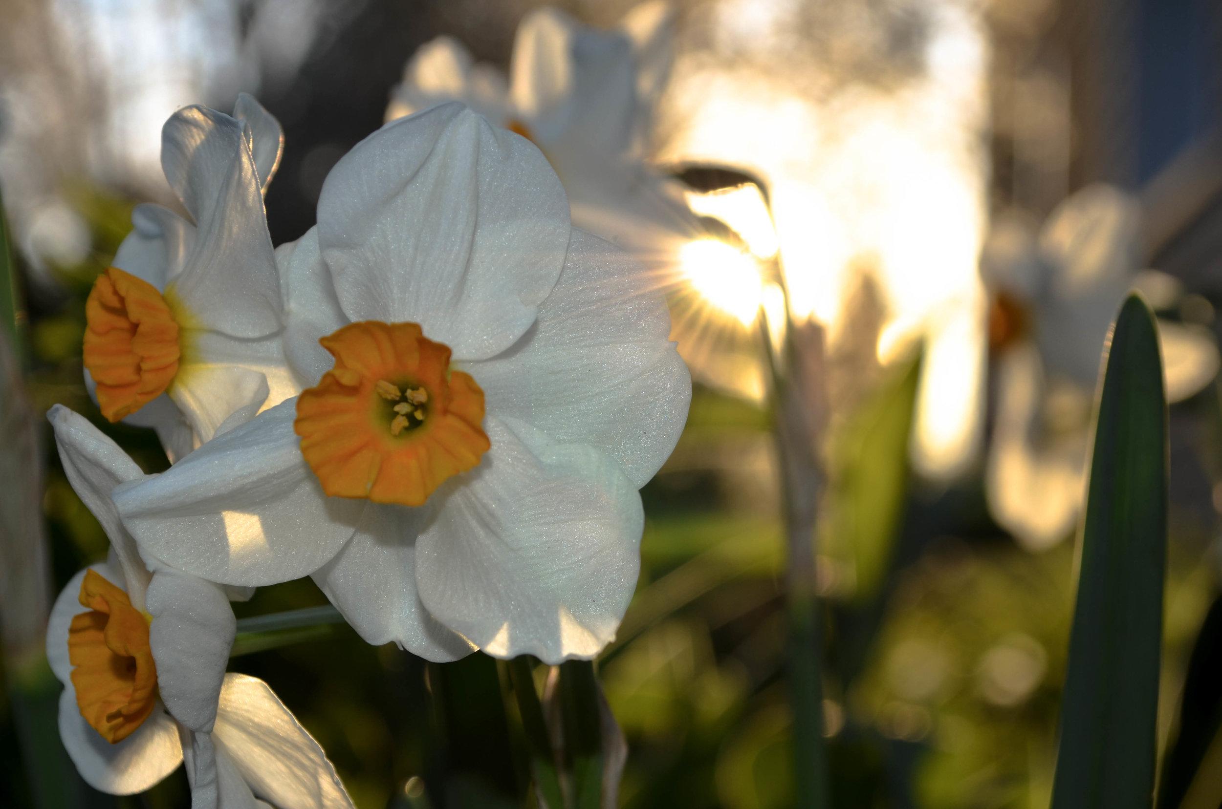 Flower (1 of 1).jpg