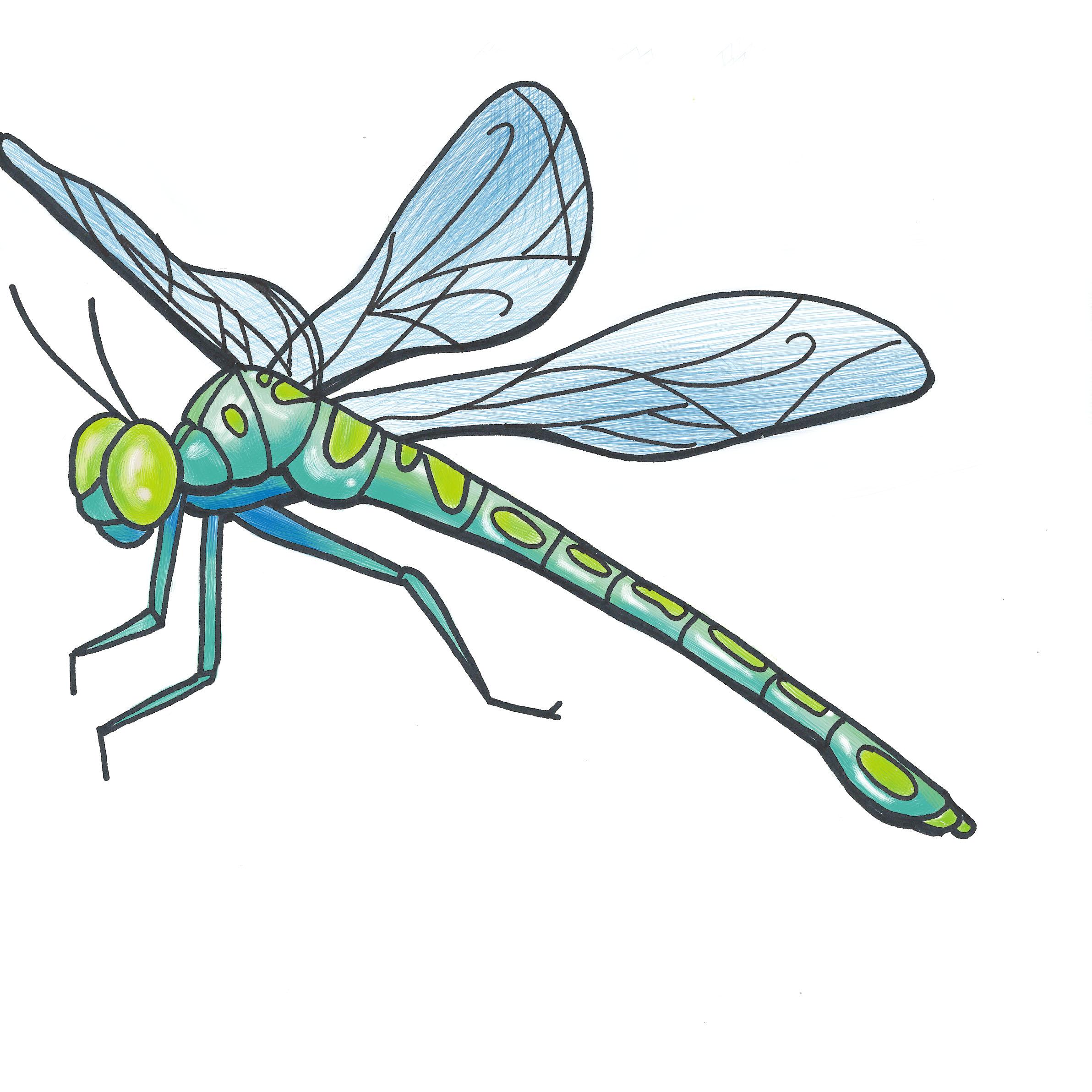 - dragonfly illustration 2 -