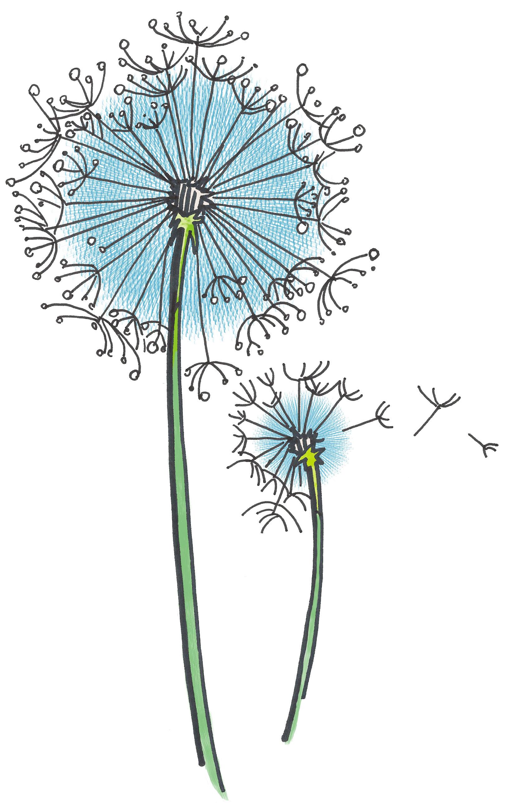- dandelion illustration -