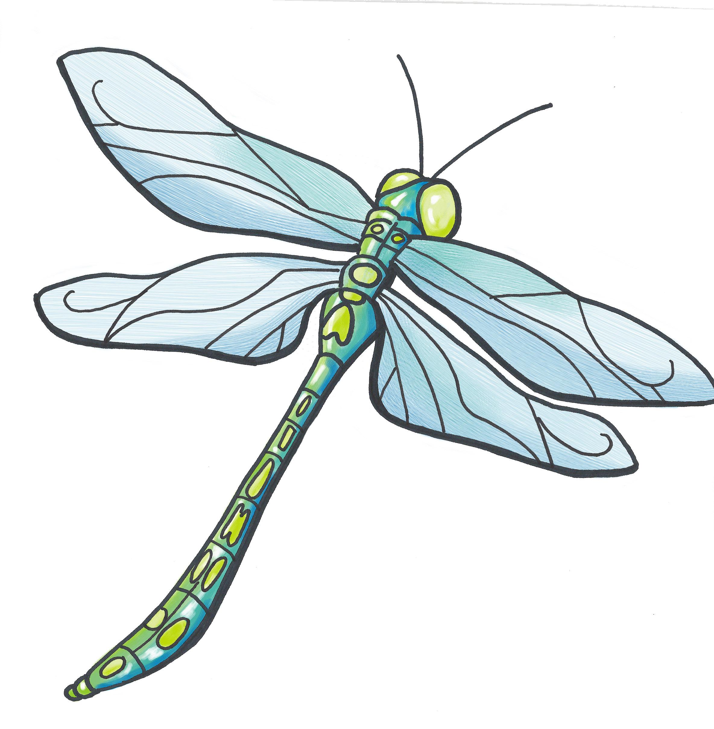 - dragonfly illustration 3 -