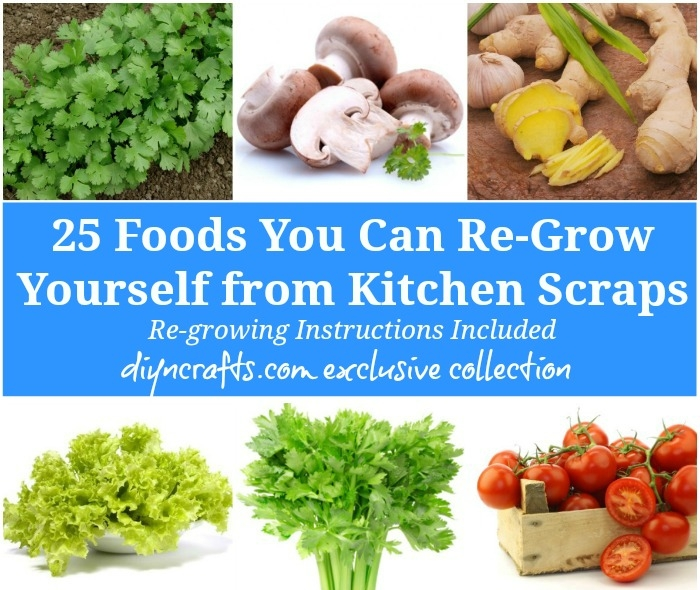 Regrow your produce! -