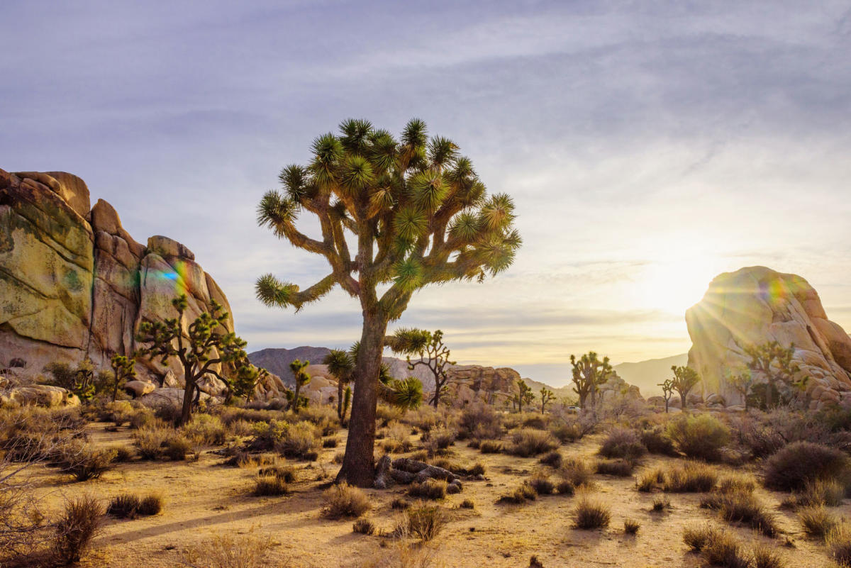 Joshua Tree National Park - Named after the iconic twisted and bristled Yucca Brevifolia tree 'Joshua Tree', this fascinating park is full of unique plants and formations. When visiting the park make sure to check out Cholla Cactus Garden, Rock arch, and Skull rock.