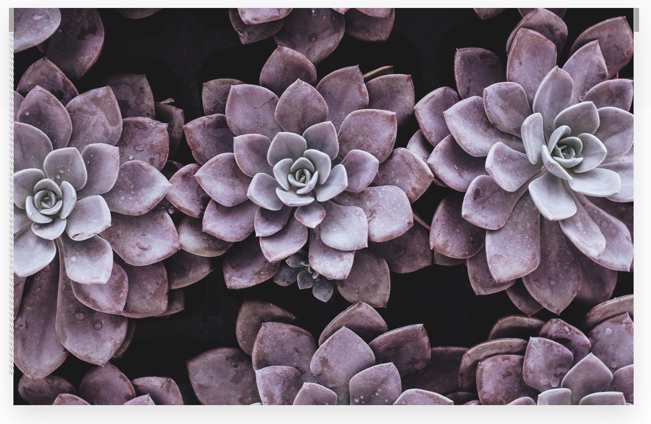 Succulent Printed Window Shade