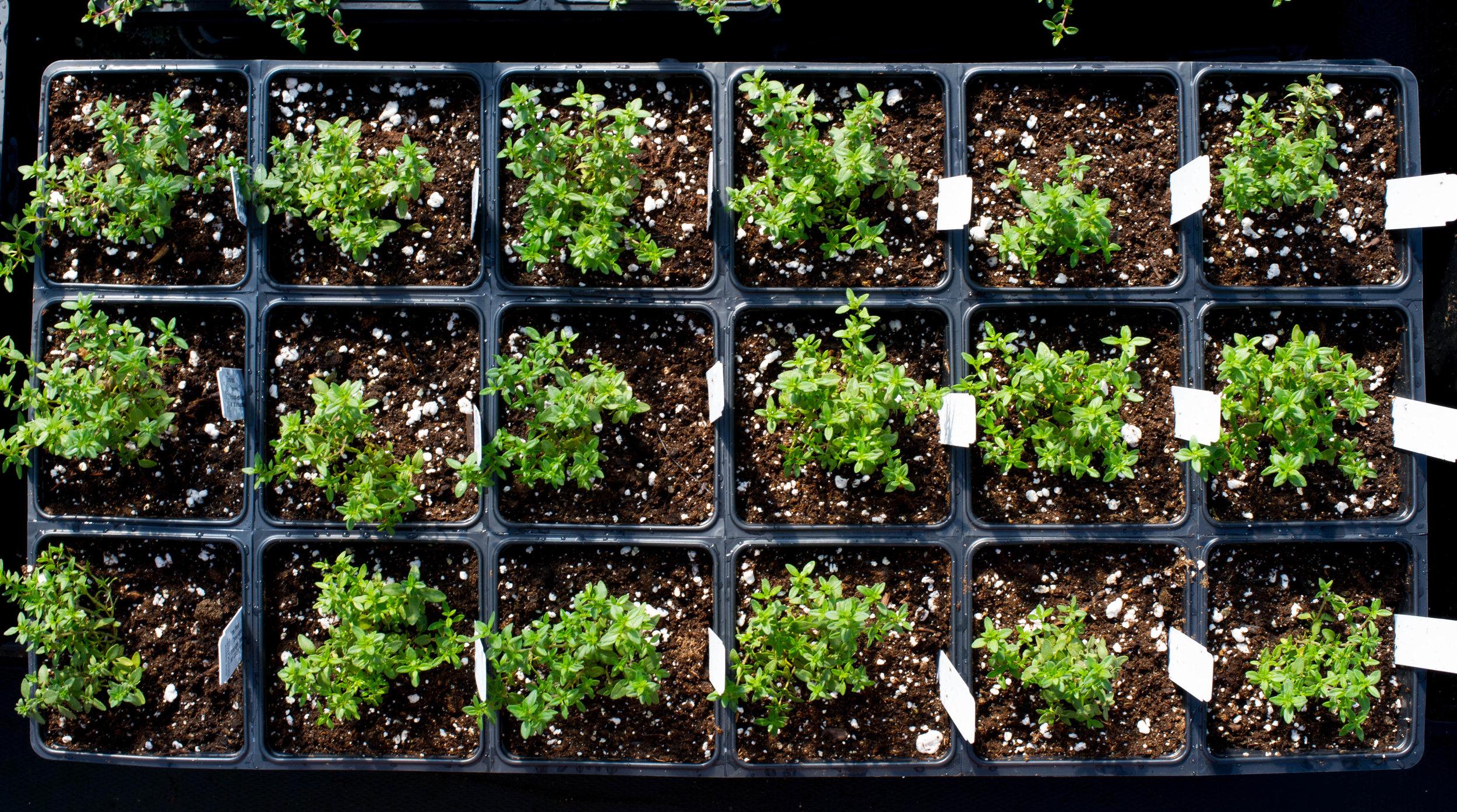 seedlings (4 of 4).jpg