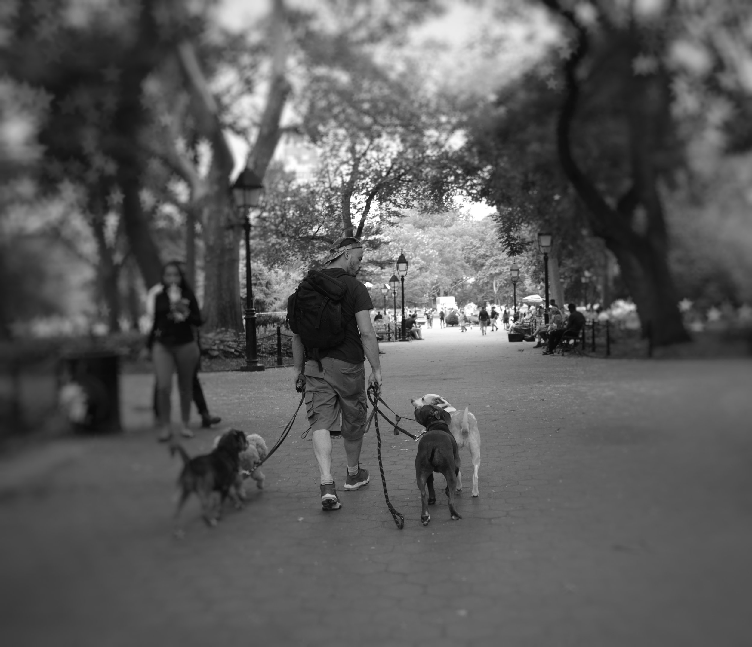 First a stroll through Washington Square Park